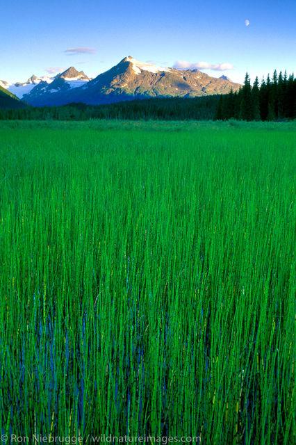 Tall Grass Full Moon