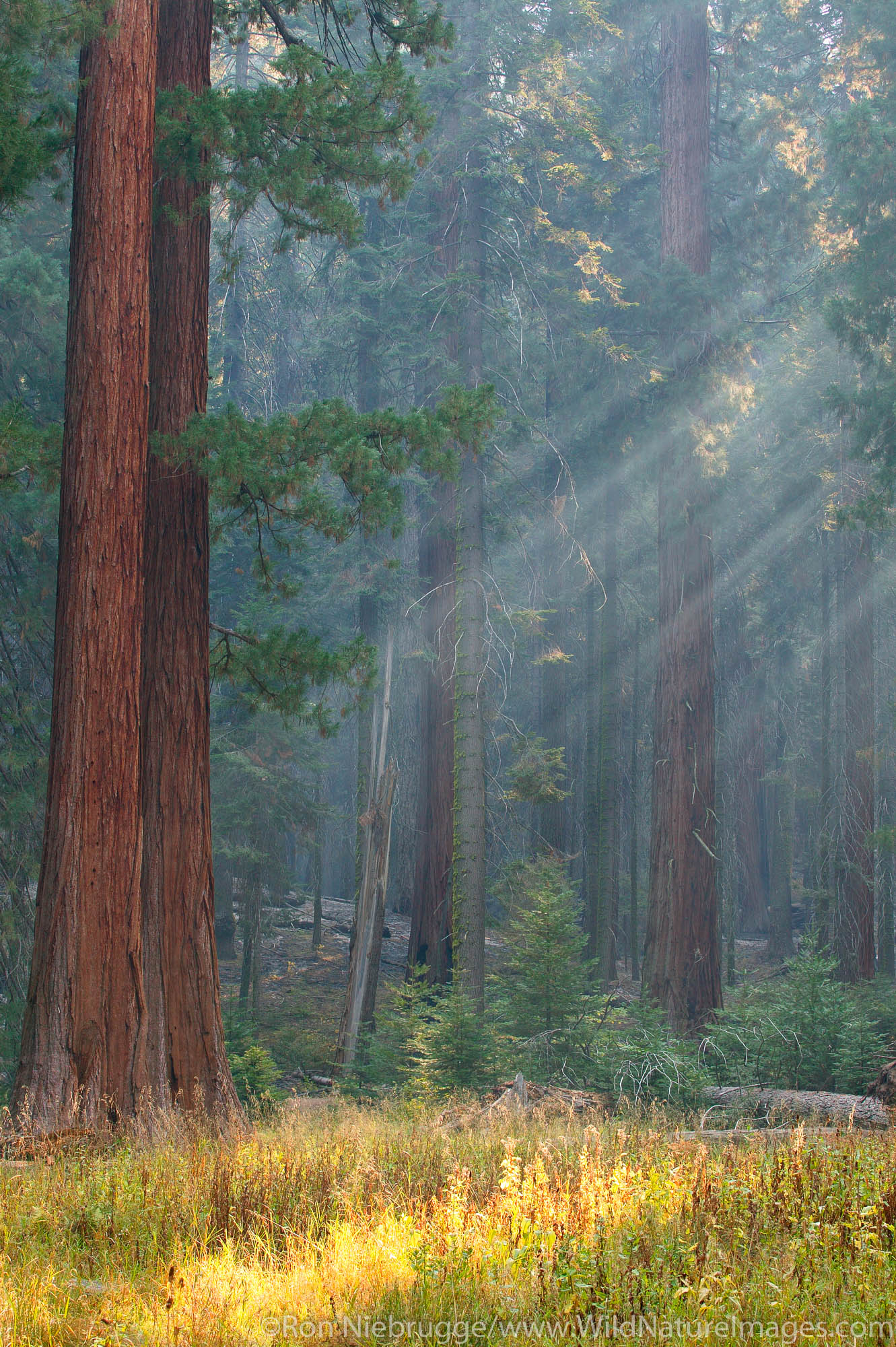 Sequoia National Park, California, photo