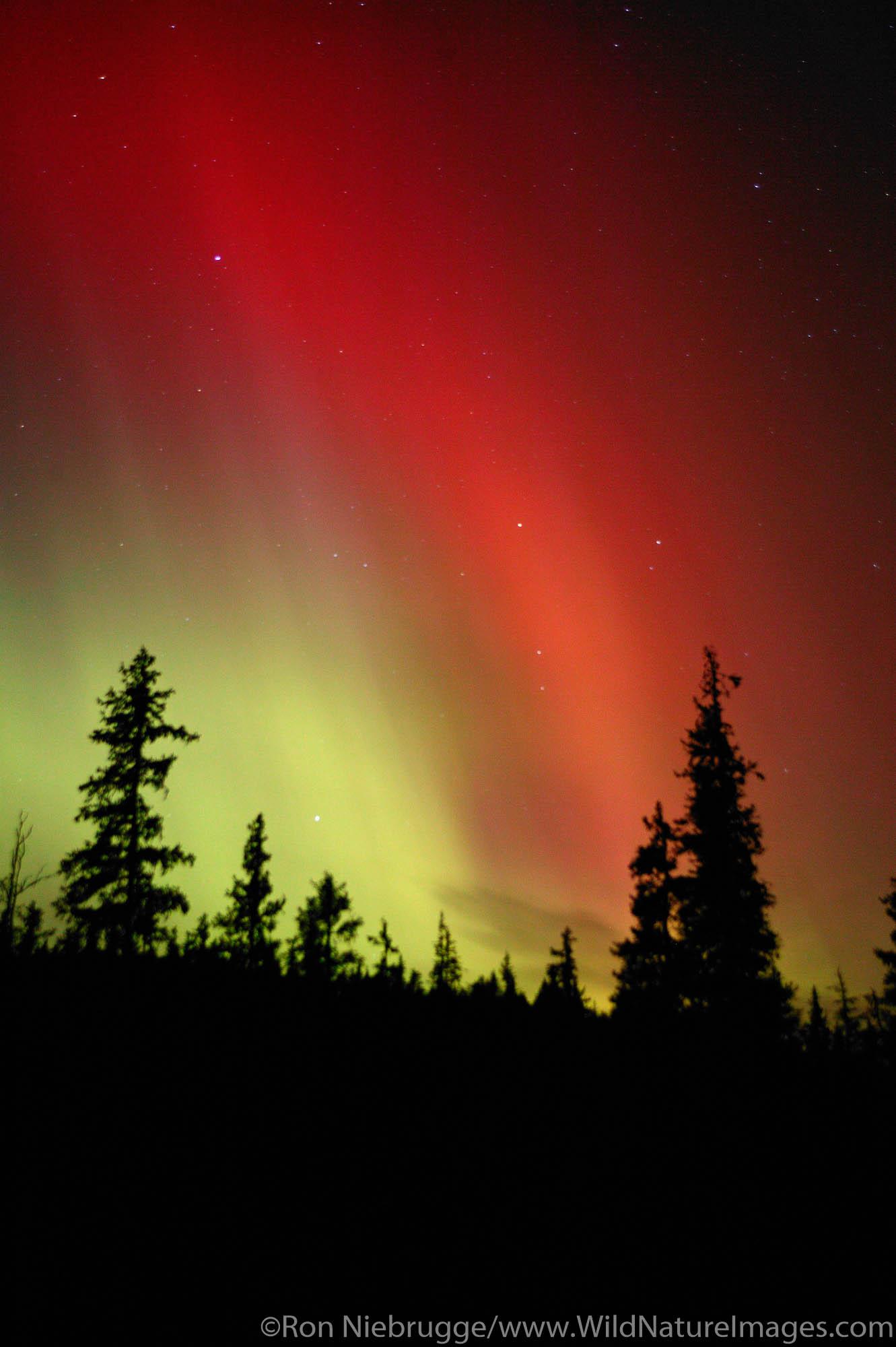 Colorful Northern Lights (Aurora Borealis), Chugach National Forest on the Kenai Peninsula near Seward, Alaska.