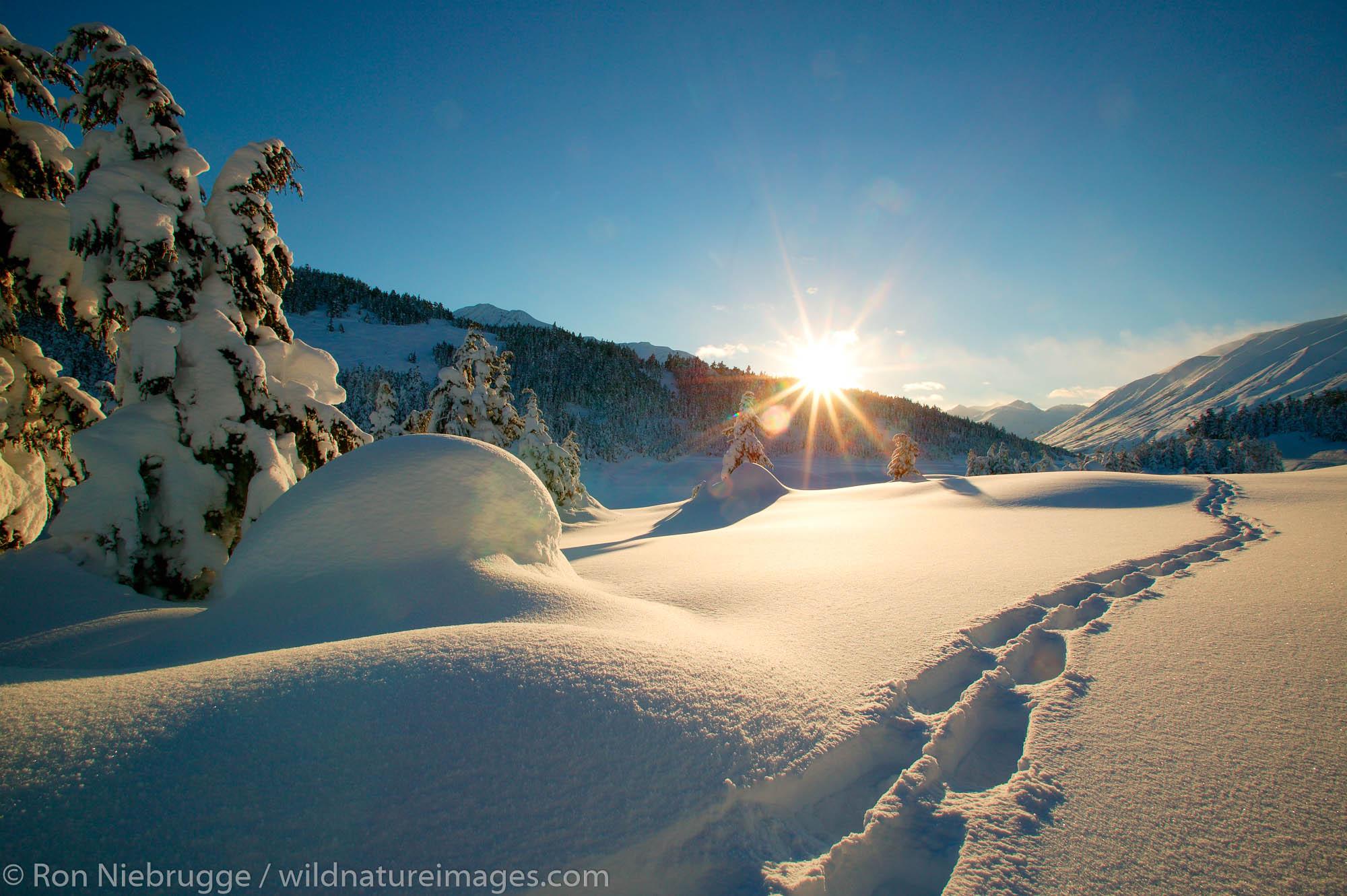 Snowshoe tracks in the snow, Chugach National Forest in the winter, Turnagain Pass, Kenai Peninsula, Alaska.