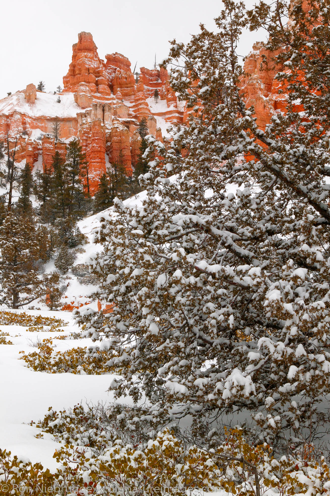 Mossy Cave Trail, Bryce National Park in winter, Utah.