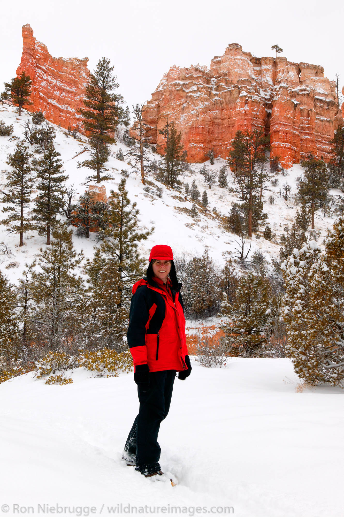 A visitor (MR) hiking on the Mossy Cave Trail, Bryce National Park in winter, Utah.  Model Released