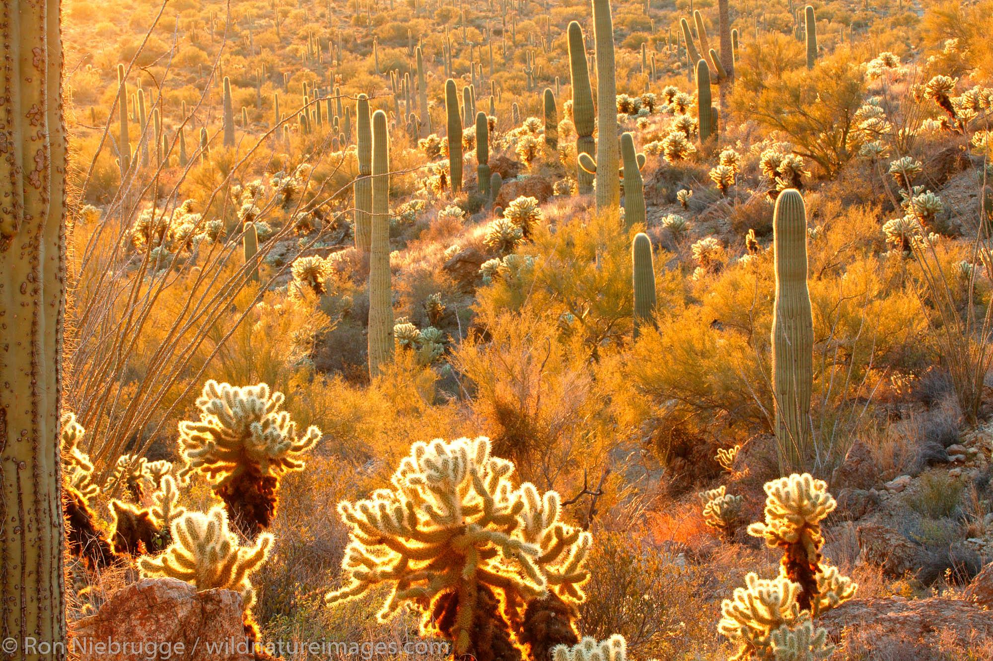Tucson Mountain County Park, Gates Pass Road, Tucson, Arizona.