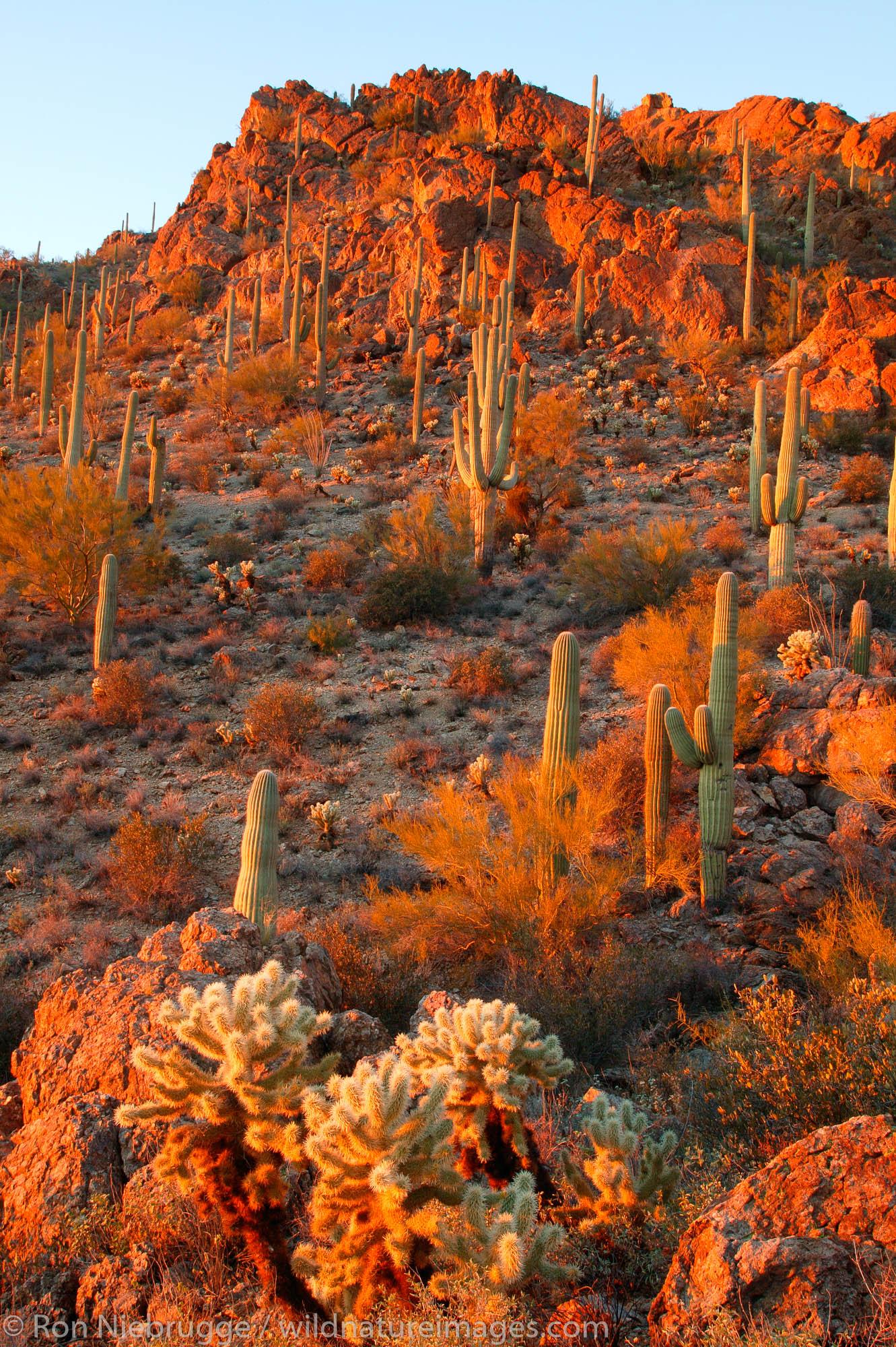 Tucson Mountain County Park, Tucson, Arizona.