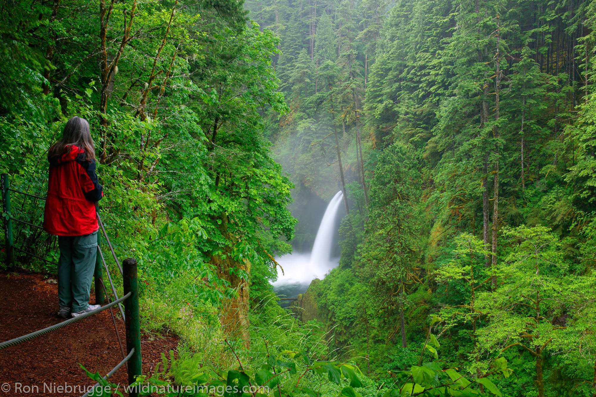 A visitor (mr) views the Metlako Falls along the Eagle Creek Trail, Columbia River Gorge National Scenic Area, Oregon.