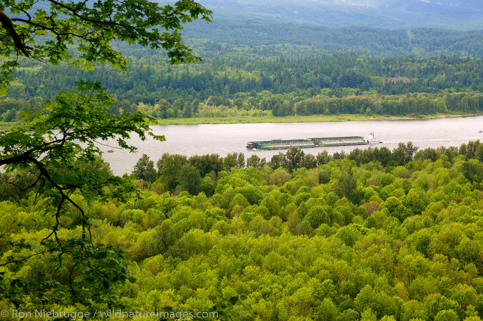 The Columbia River from the Horsetail Fall Trail, Columbia River Gorge National Scenic Area, Oregon.