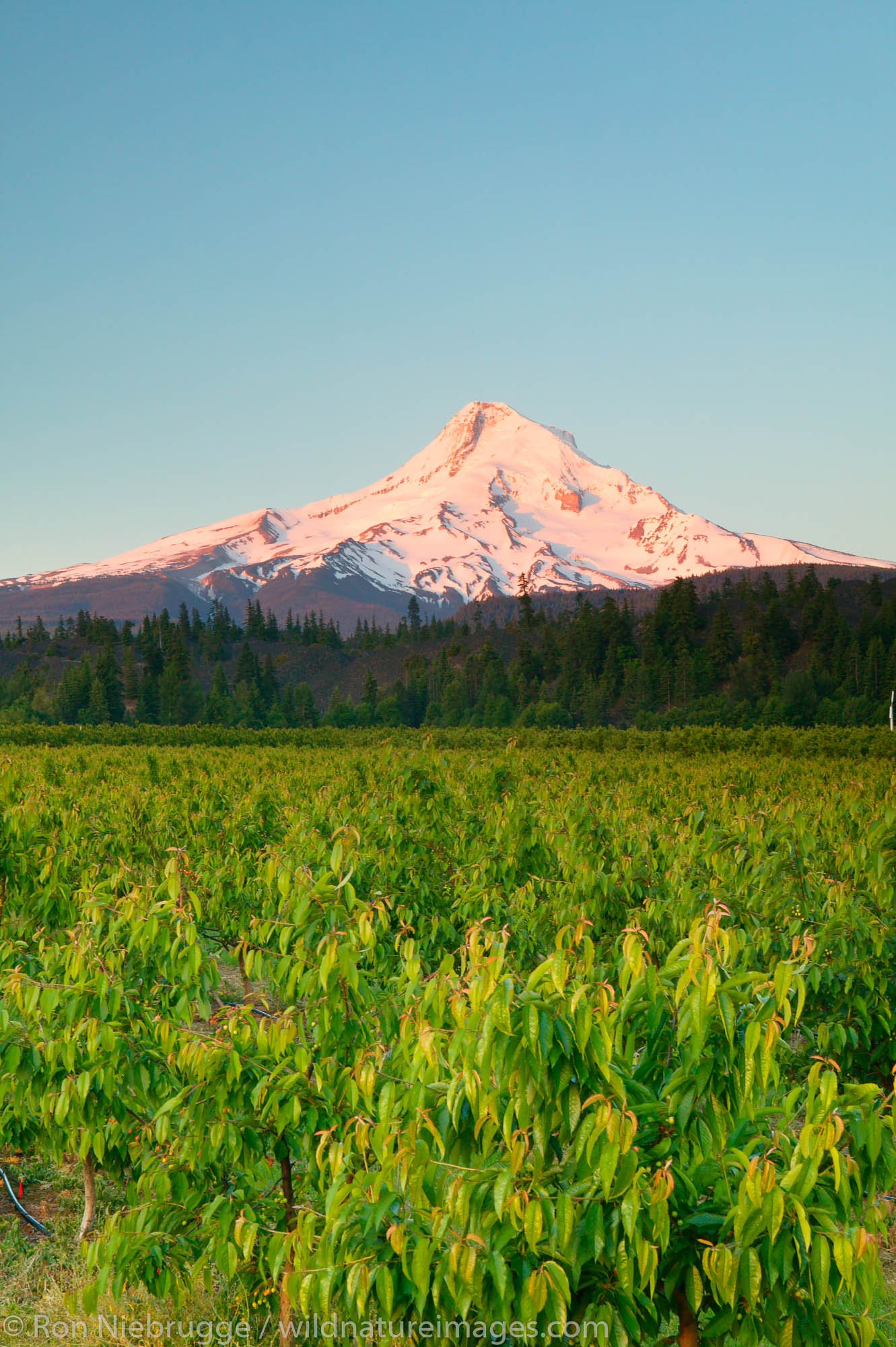 Hood River Valley, Oregon., photo