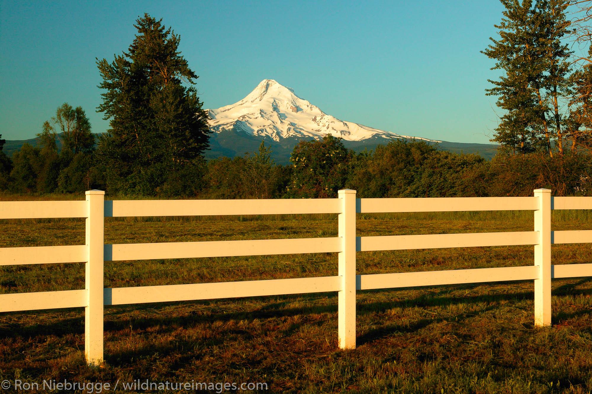 Farmland and Mt. Hood, Hood River Valley, Oregon.