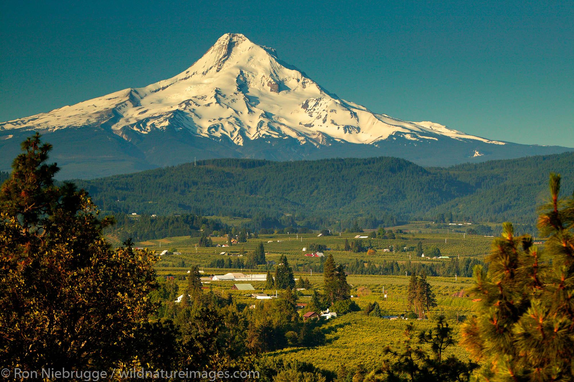Farmland and Mt. Hood, Oregon.