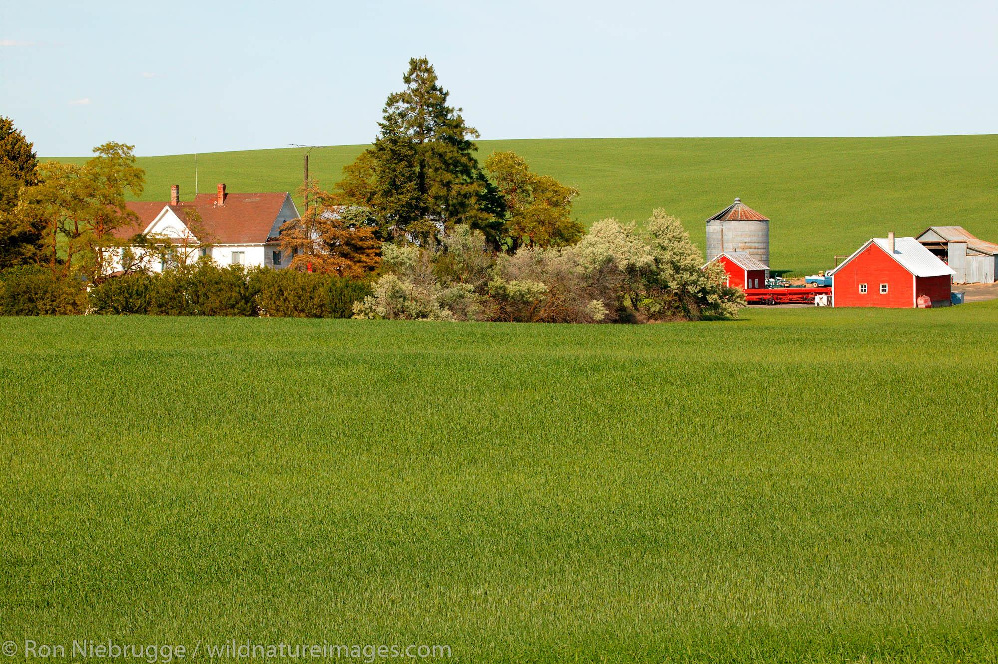 A barn and other buildings on farmland near Ritzville, Eastern Washington.