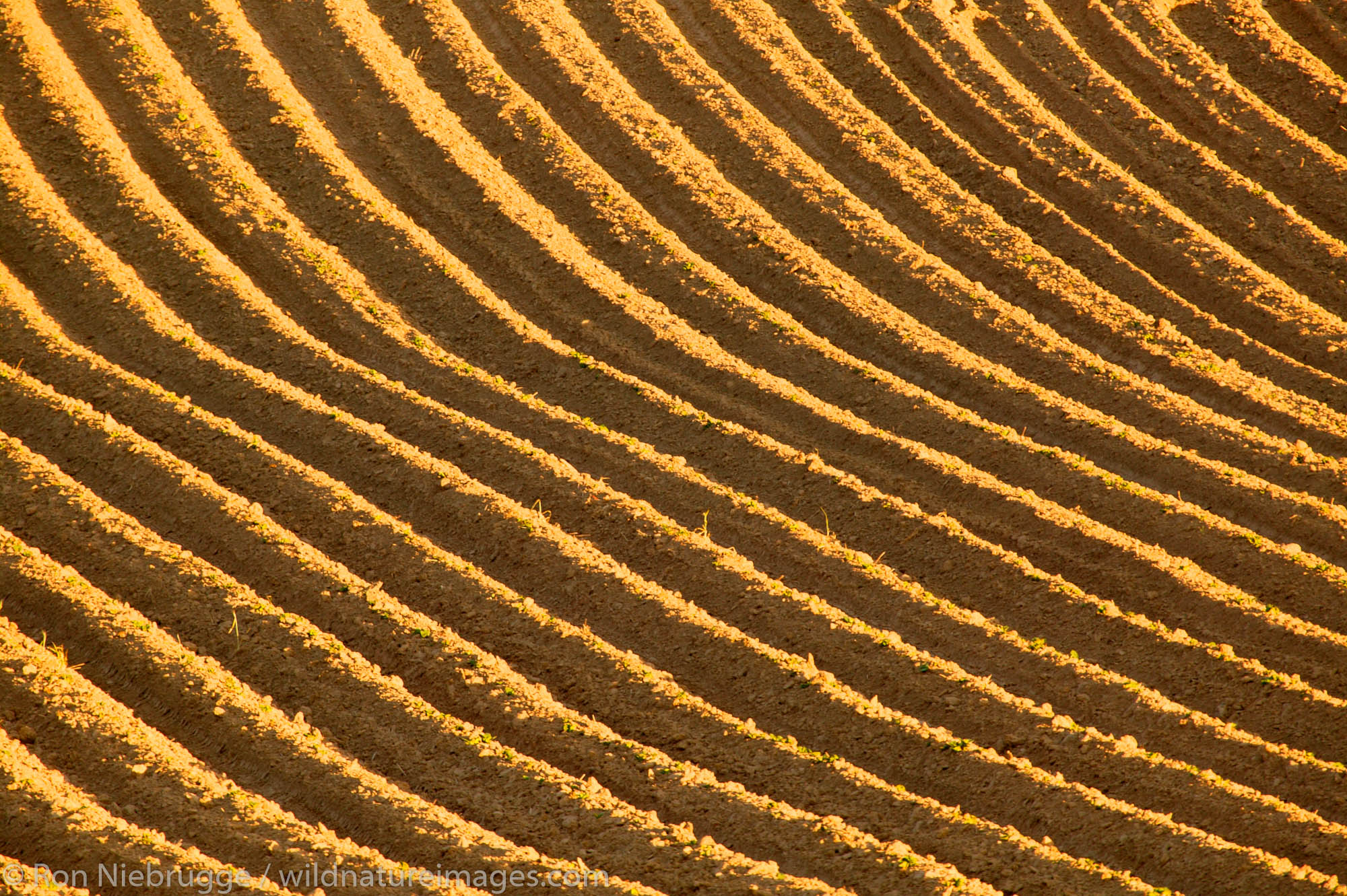 Plowed fields ready for growing near Grand Coulee, Washington.