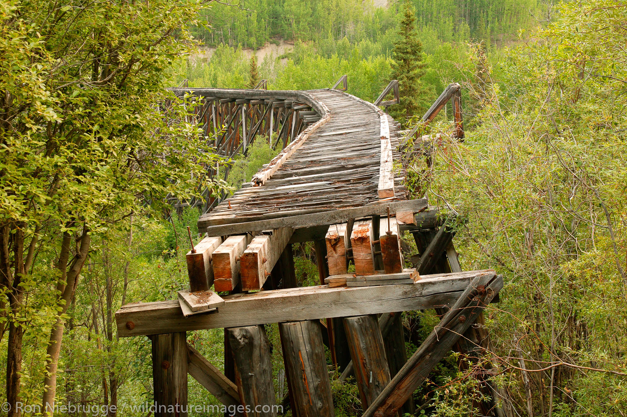 The Gilahina railroad trestle can be seen on the road to McCarthy, Wrangell-St Elias National Park and Preserve, Alaska.
