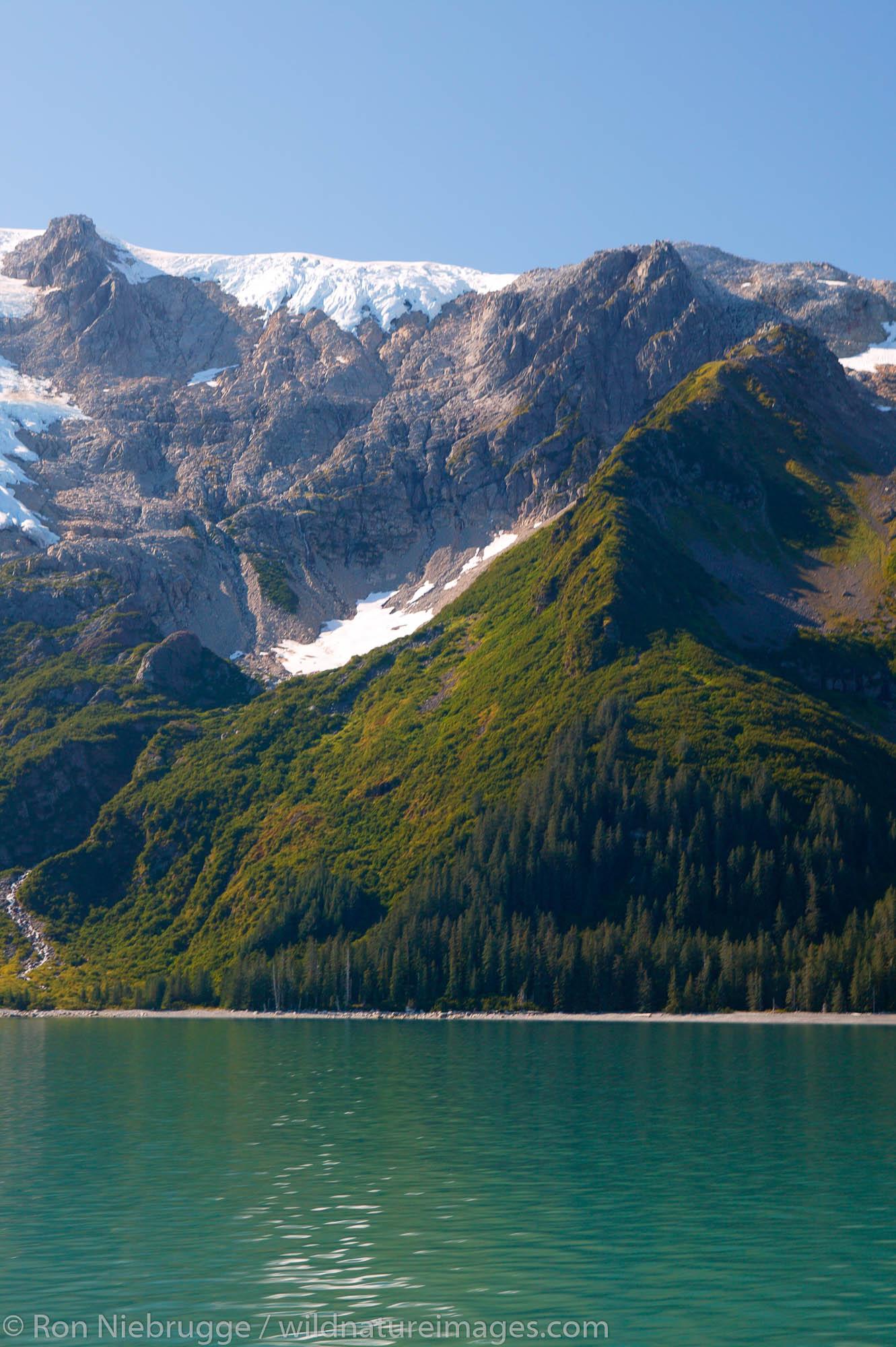 Plant succession along the shores of Holgate Arm, Aialik Bay, Kenai Fjords National Park, Alaska.