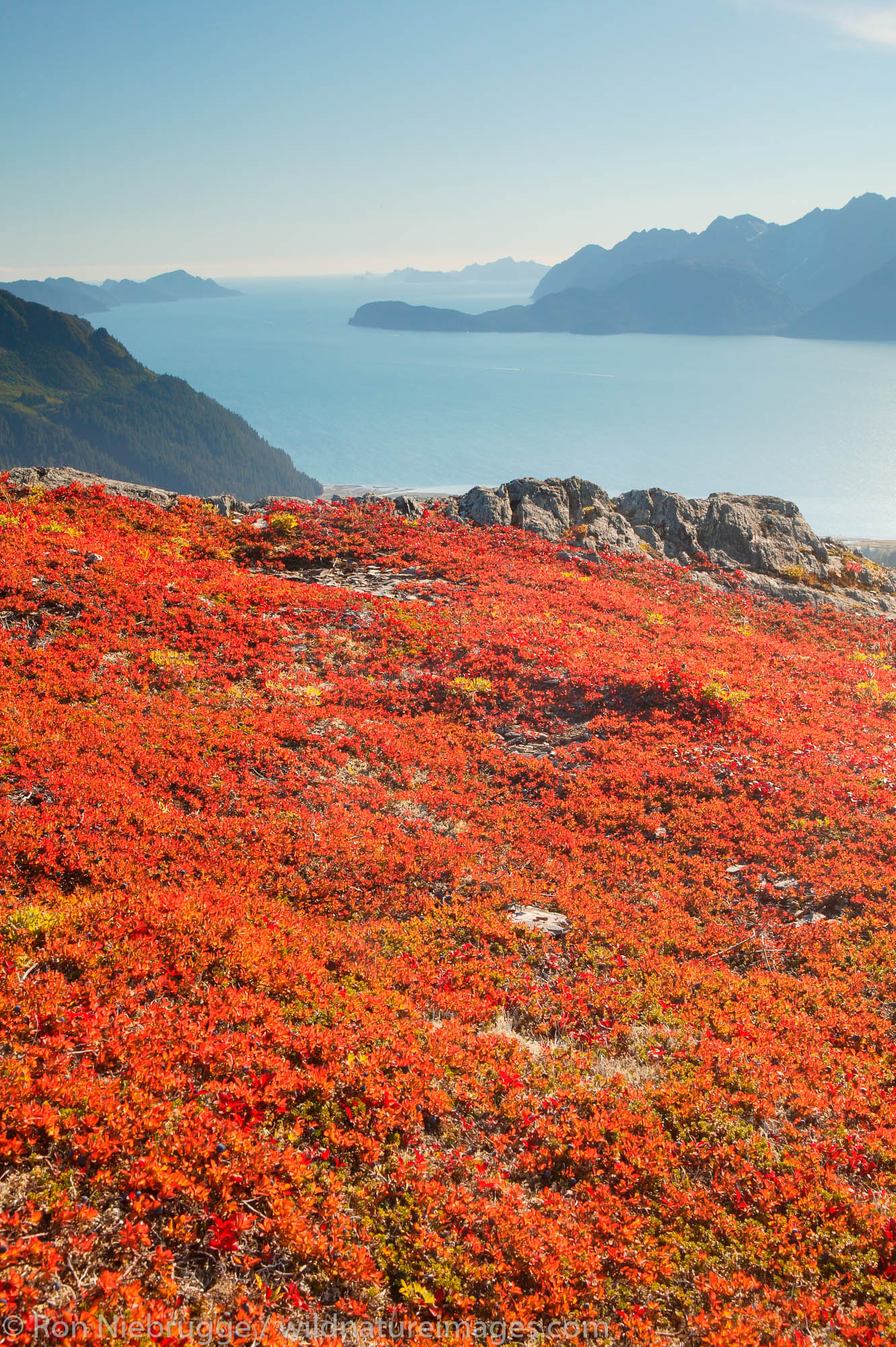 Fall colors on Mt. Alice looking down on Resurrection Bay, Chugach Natonal Forest, Seward, Alaska.