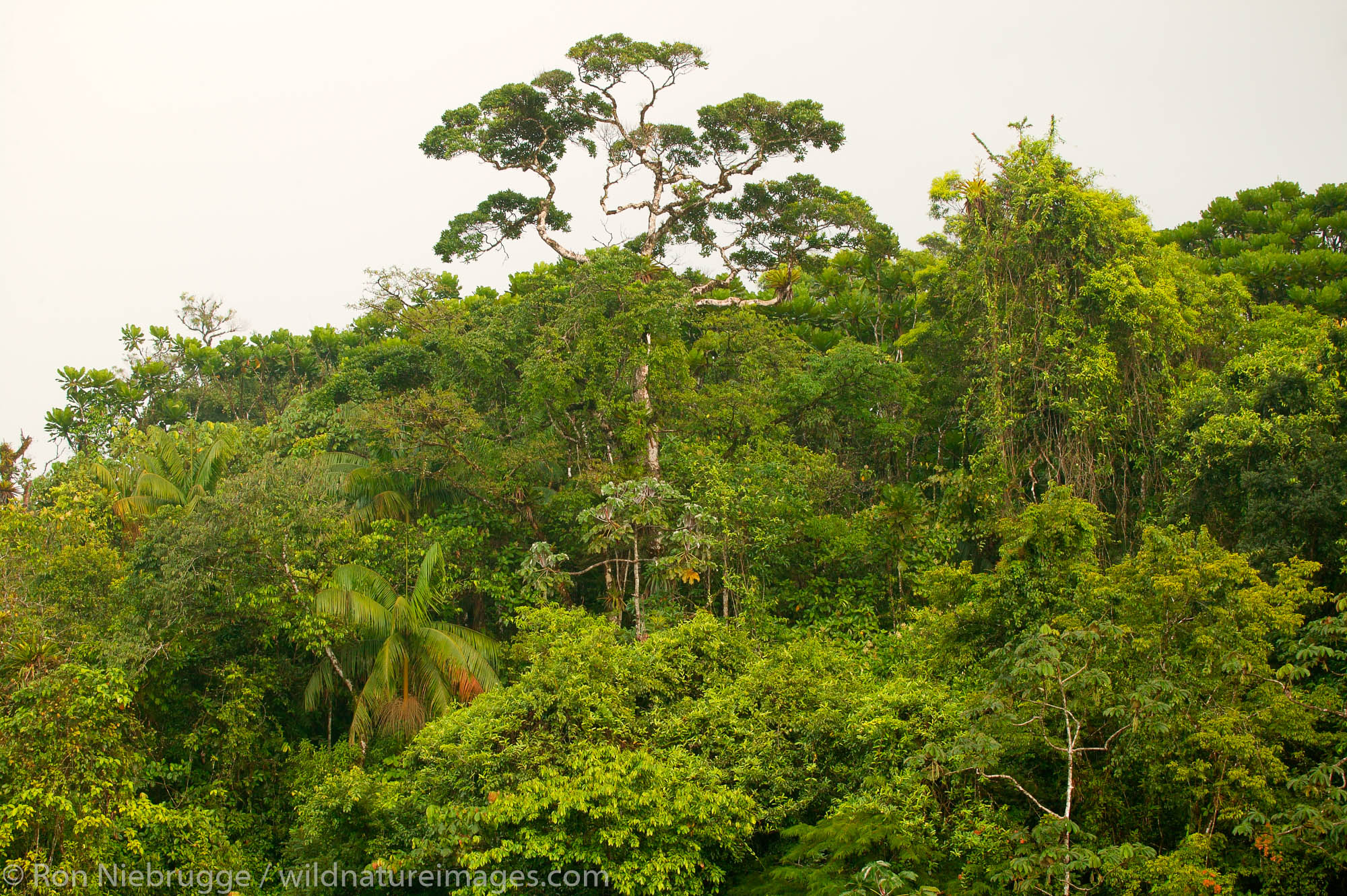 Tropical rainforest, Tabacon Hot Spring Resort and Spa, Costa Rica.