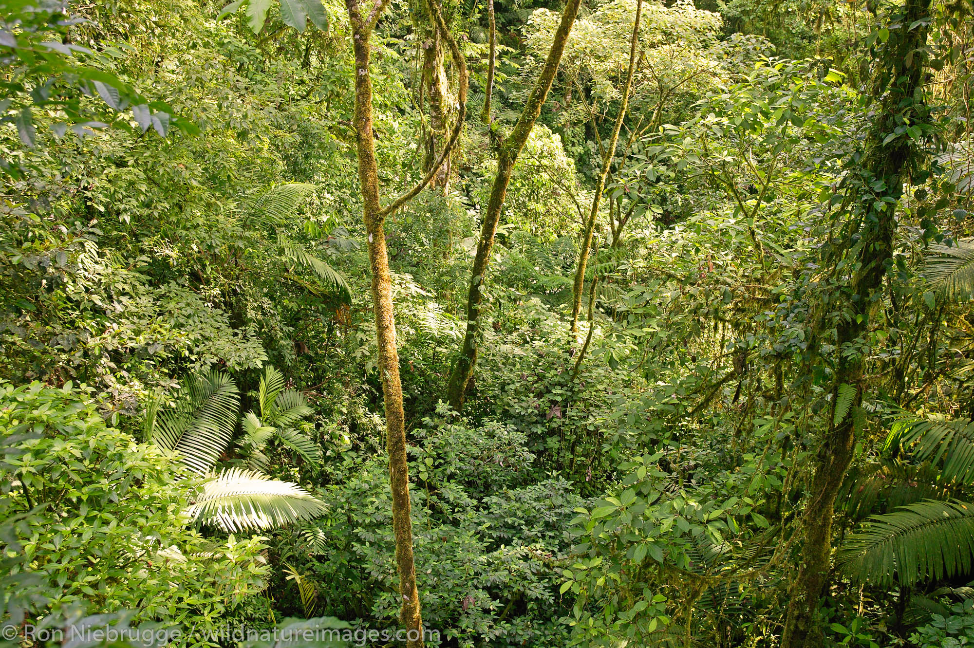 The rain Forest from the Arenal Hanging Bridges Trail, Arenal, Costa Rica.