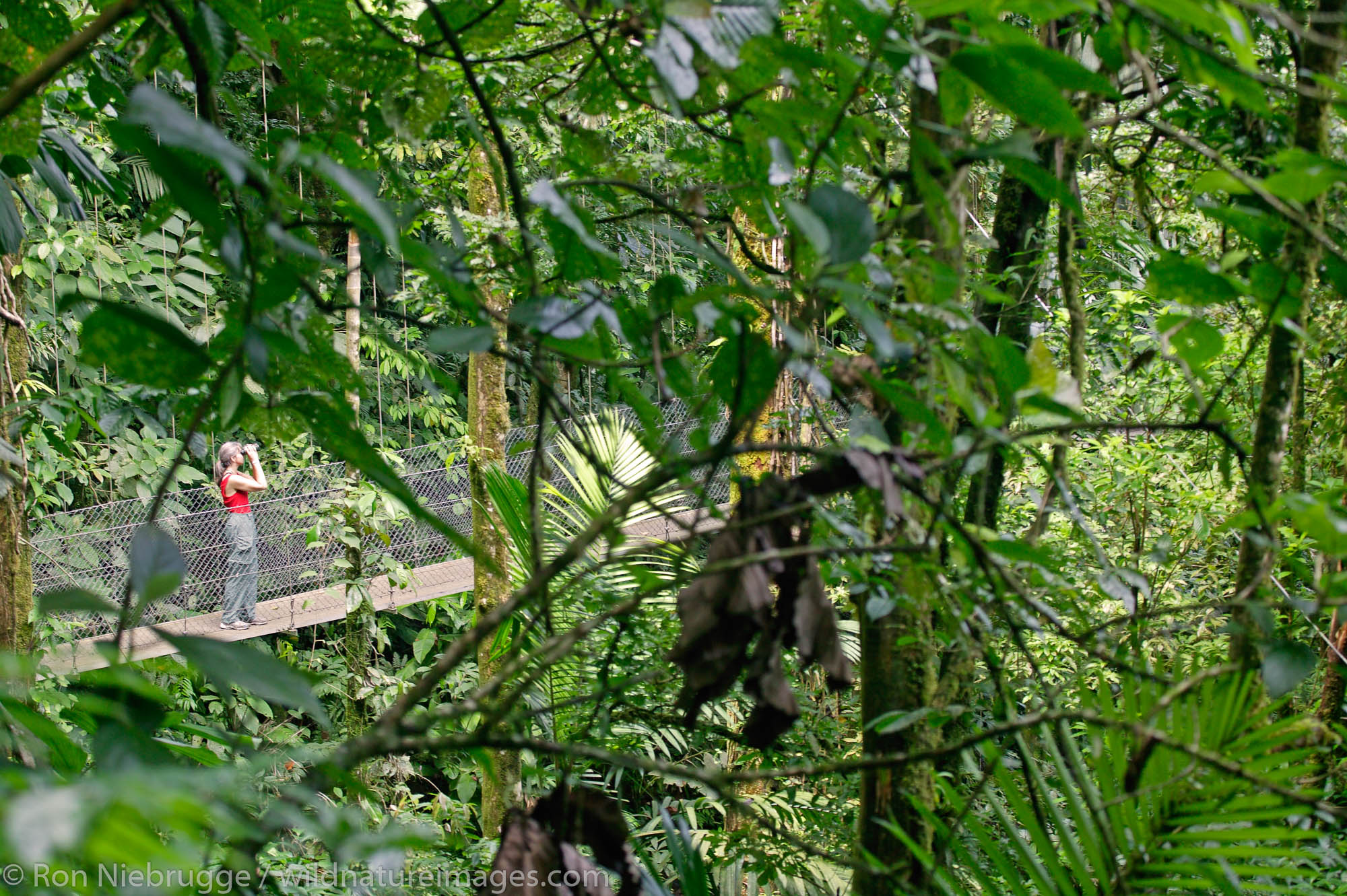 A visitor (mr) on a hanging bridge on Arenal Hanging Bridges Trail, Arenal, Costa Rica.