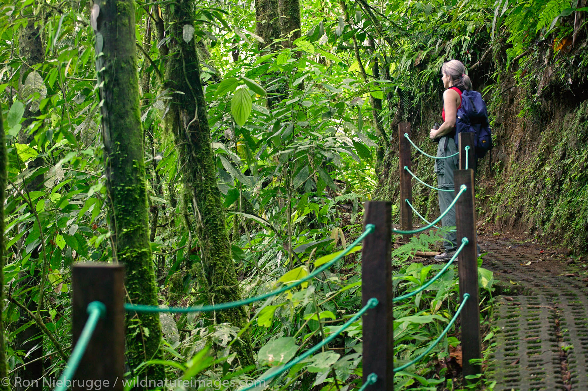 A visitor (mr) on the Arenal Hanging Bridges Trail, Arenal, Costa Rica.