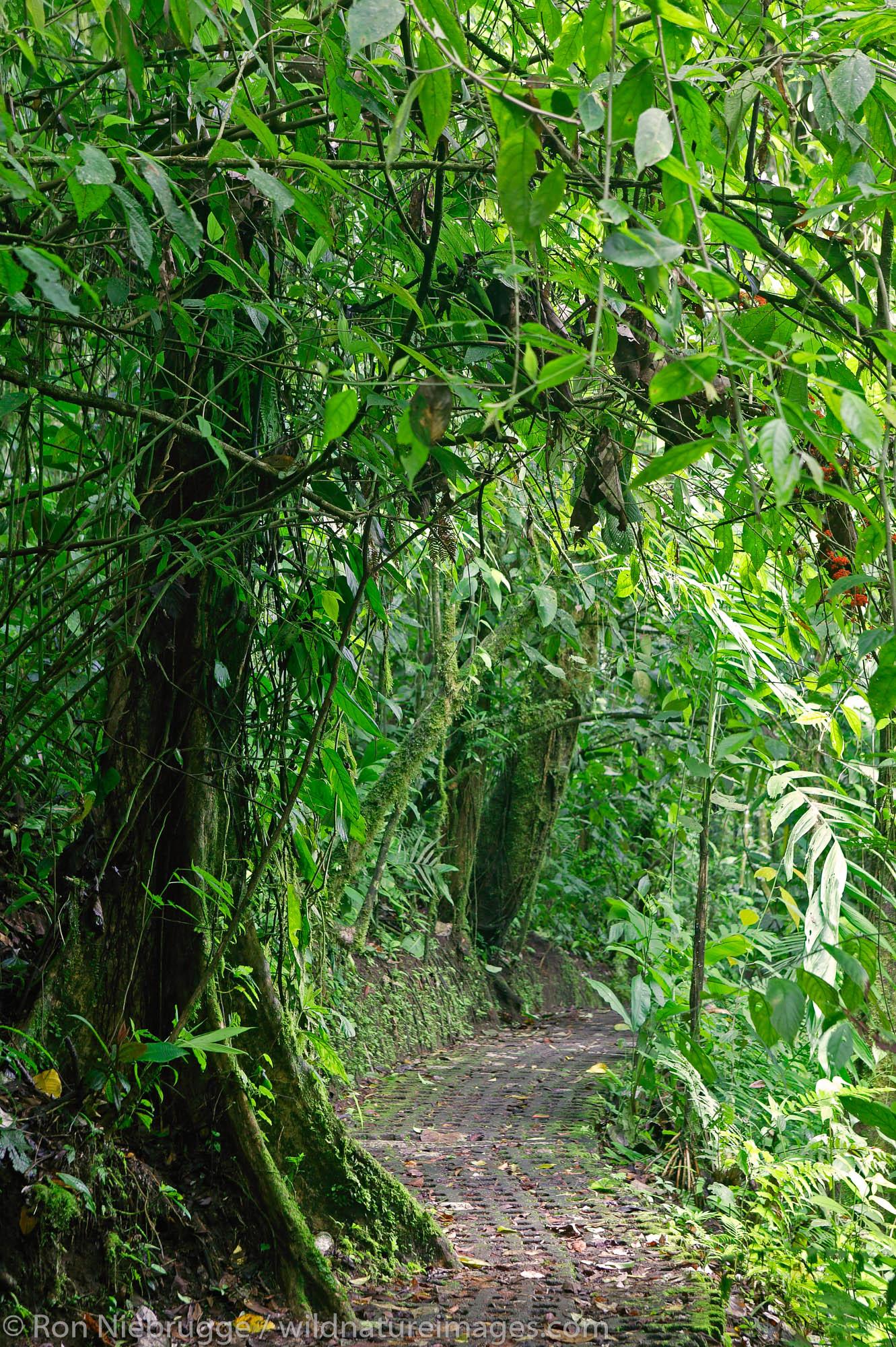 Arenal Hanging Bridges Trail, Arenal, Costa Rica.