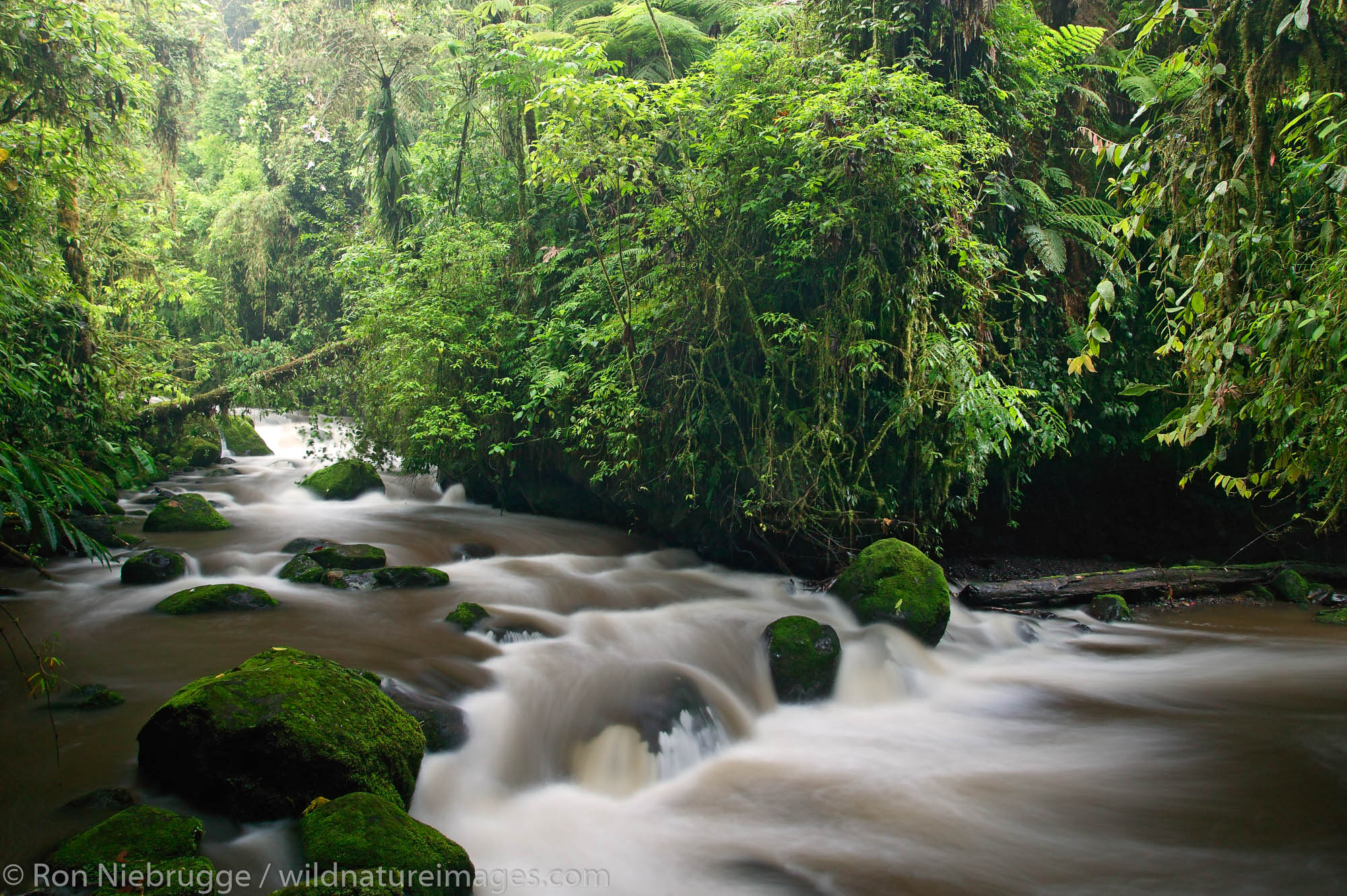 The La Paz River flows along the trail at the La Paz Waterfall Gardens and Peace Lodge, Costa Rica.
