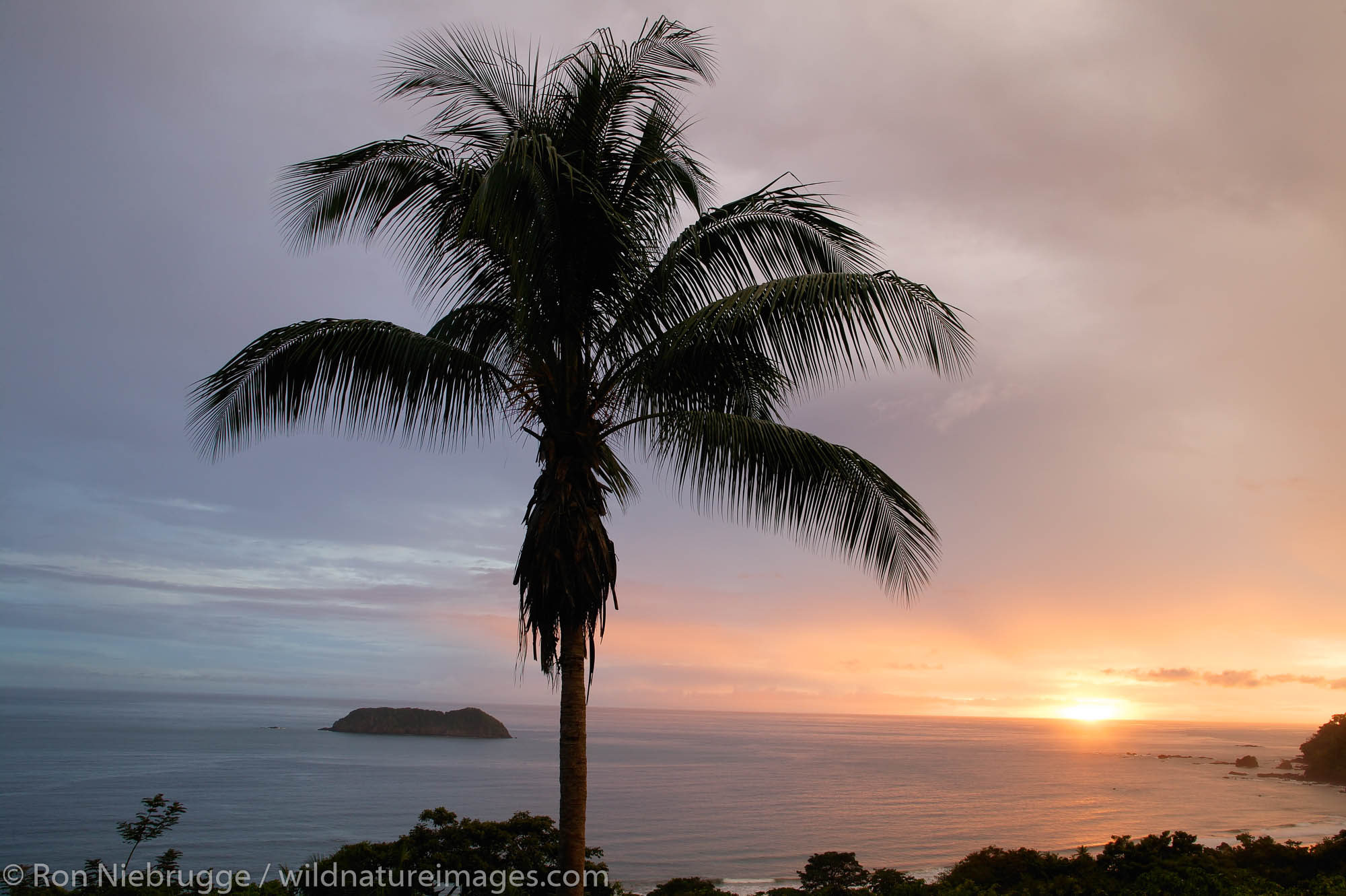 A Palm Tree at sunset, Manuel Antonio, Costa Rica.