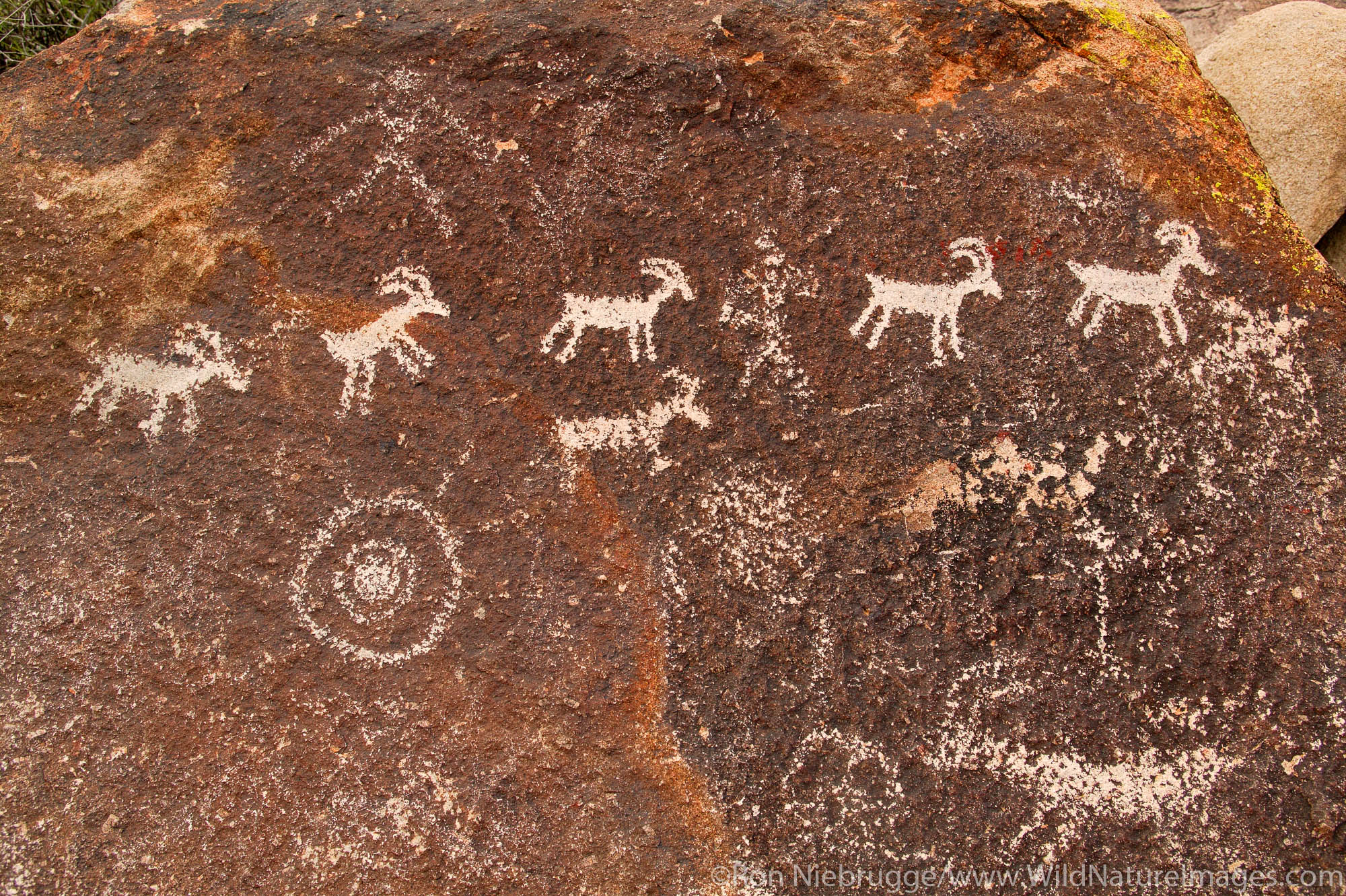 Petroglyphs in Grapevine Canyon of the Newberry Mountains, along Christmas Tree Pass Road, Lake Mead Recreation Area, near Laughlin...
