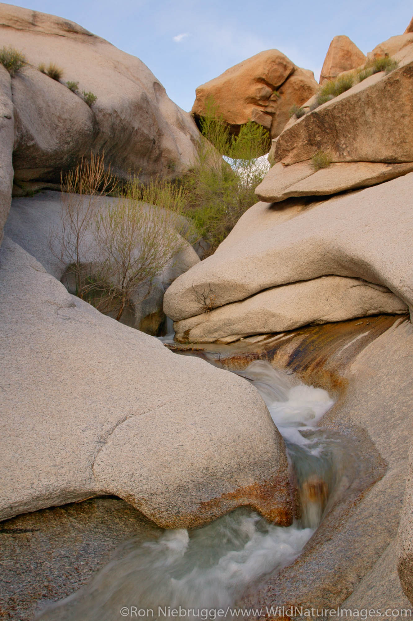 A stream in Grapevine Canyon in the Newberry Mountains, along Christmas Tree Pass road Lake Mead Recreation Area, near Laughlin...