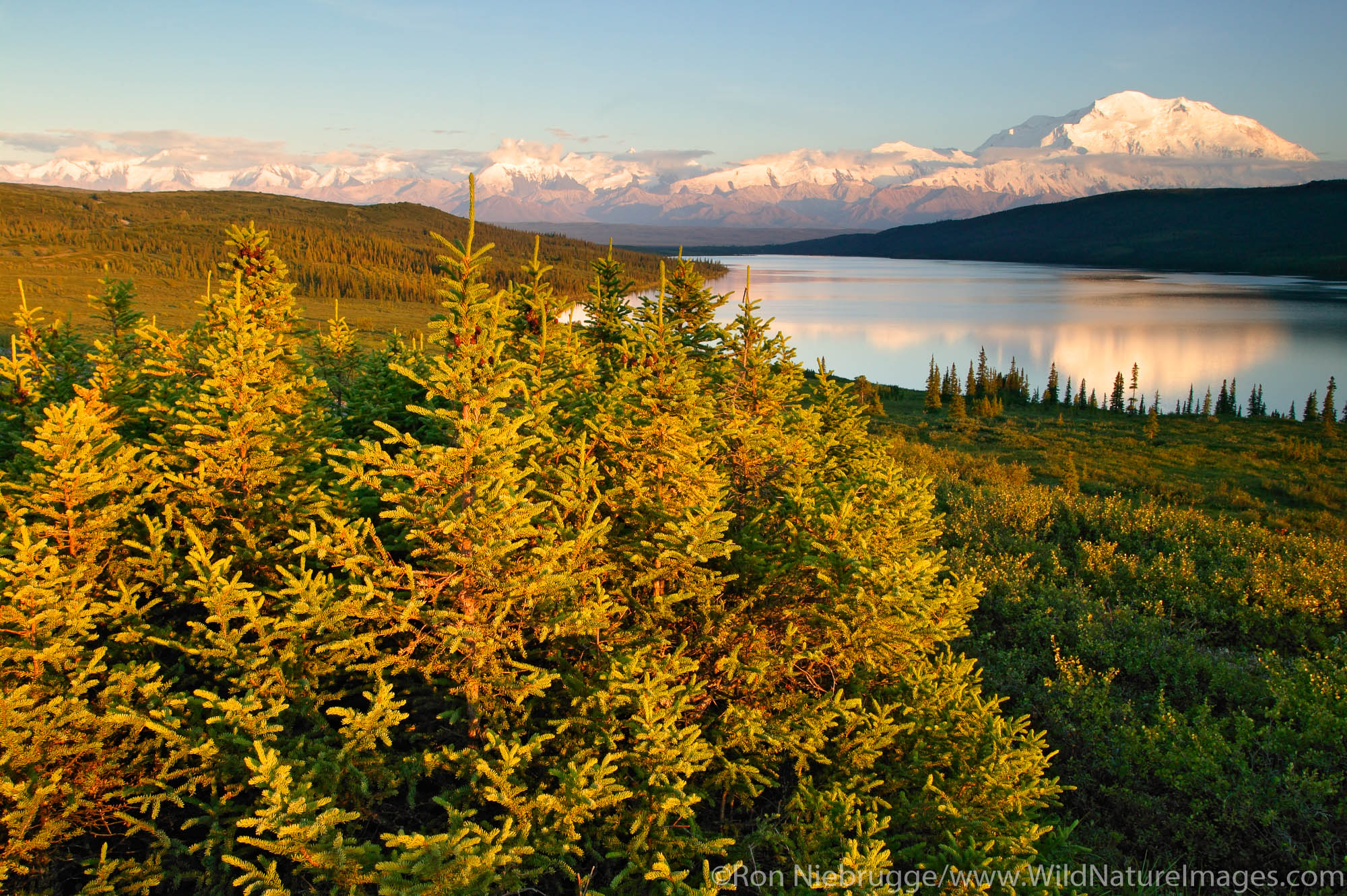 Mt. McKinley and Wonder Lake from Blueberry Hill, Denali National Park, Alaska.