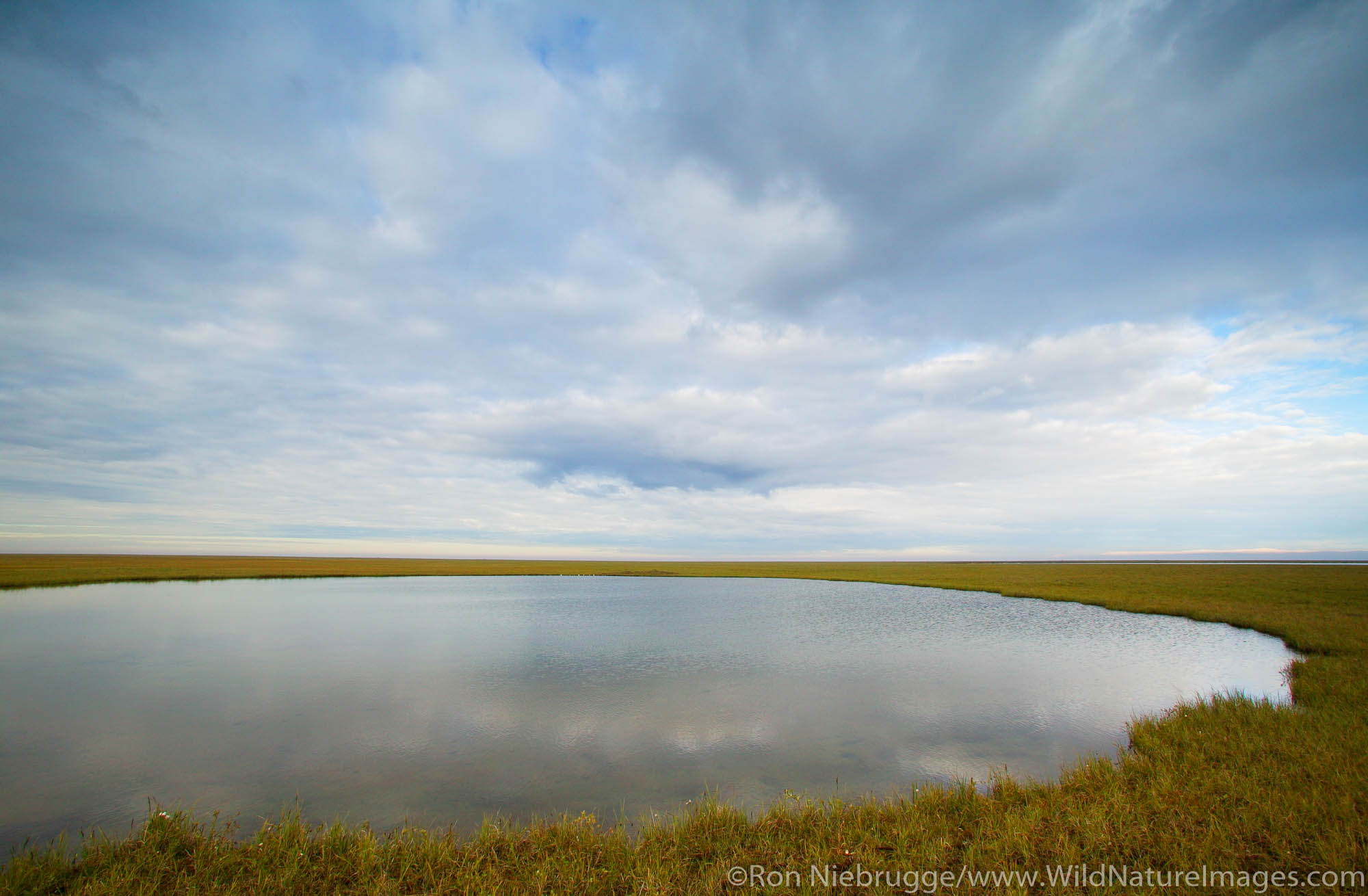 A lake on the Arctic Costal Plain near the Dalton Highway Alaska.