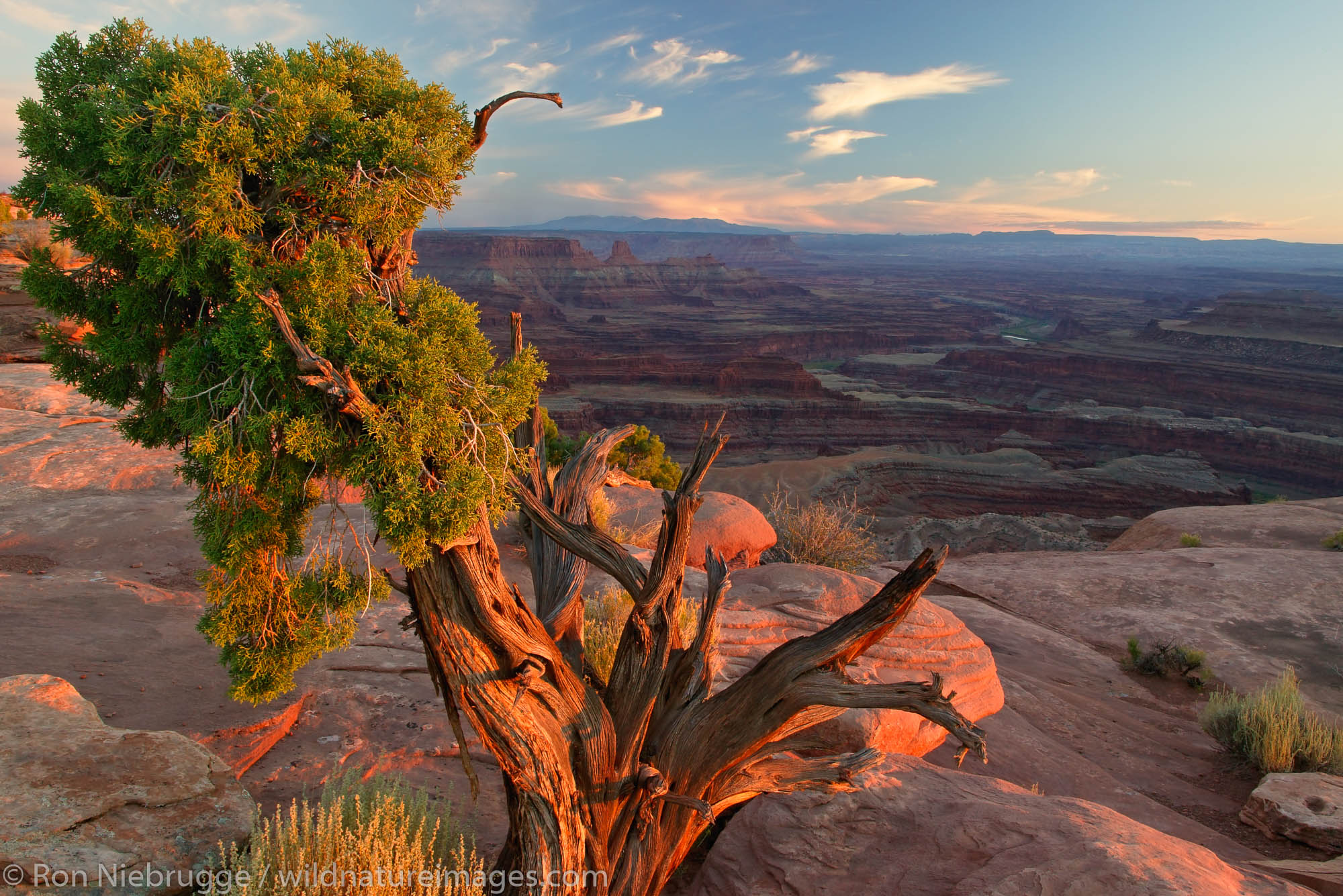 Dead Horse Point Overlook from Dead Horse Point State Park, near Moab, Utah.