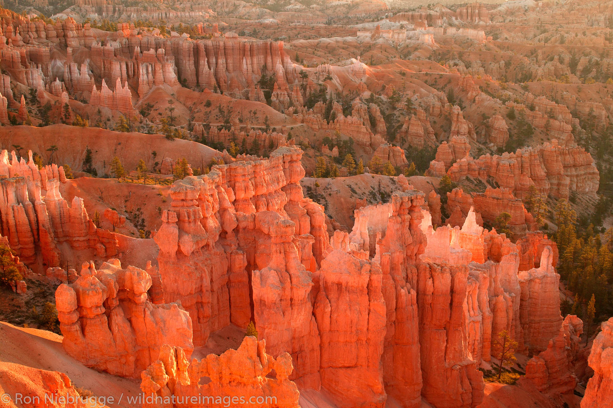 Bryce National Park at sunrise from Sunset Point, Utah.