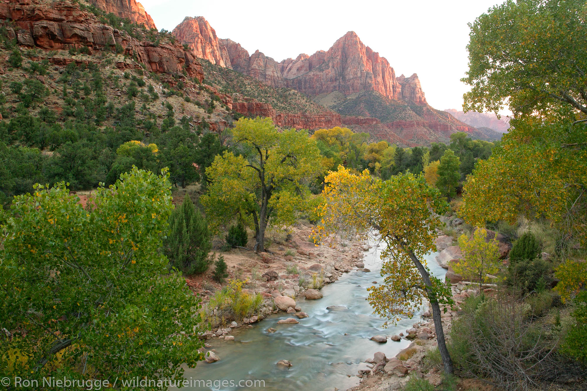 North Fork Virgin River and The Watchman, Zion National Park, Utah.