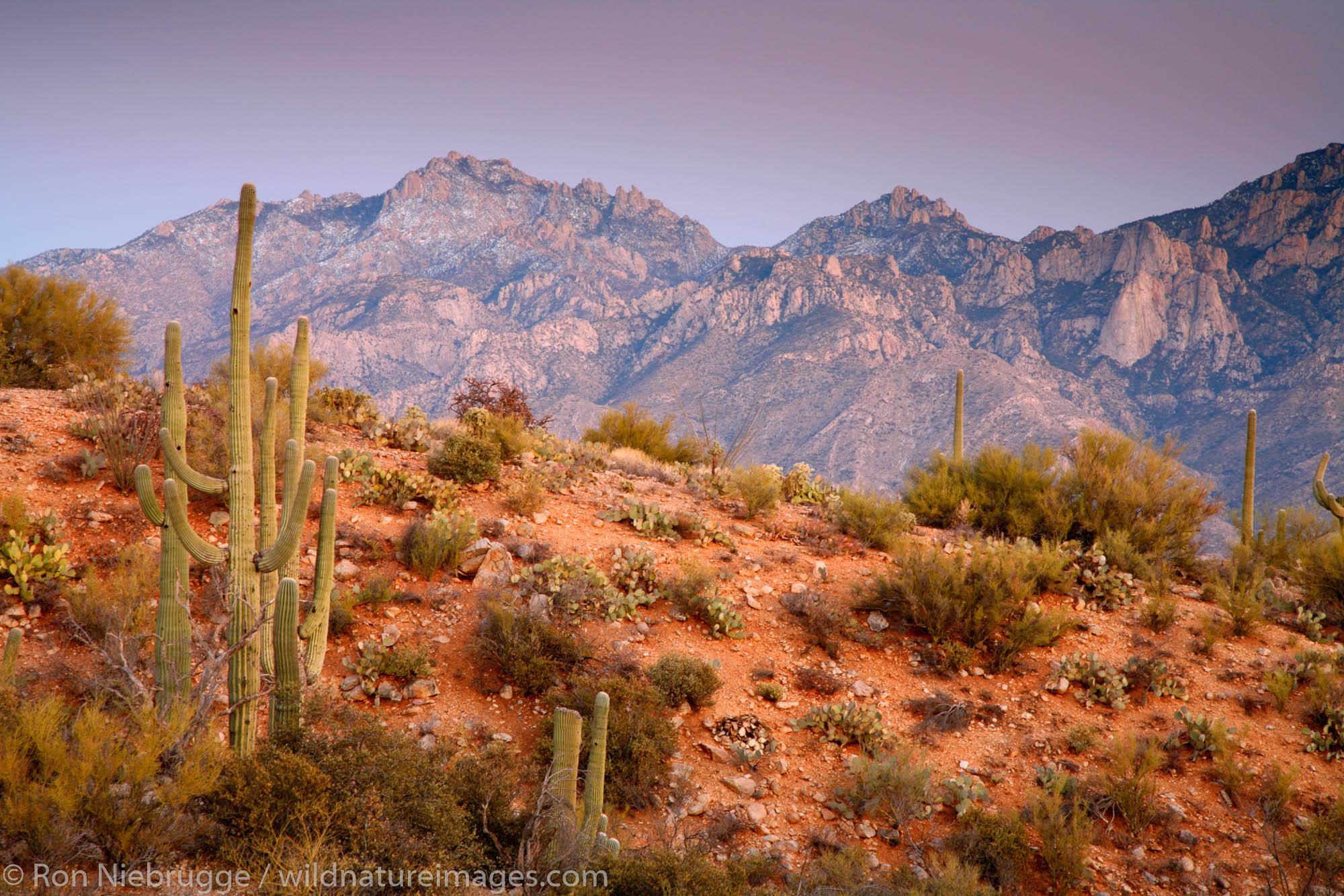 Looking towards the Santa Catalina Mountains of the Coronado National Forest, Oro Valley, Tucson, Arizona.