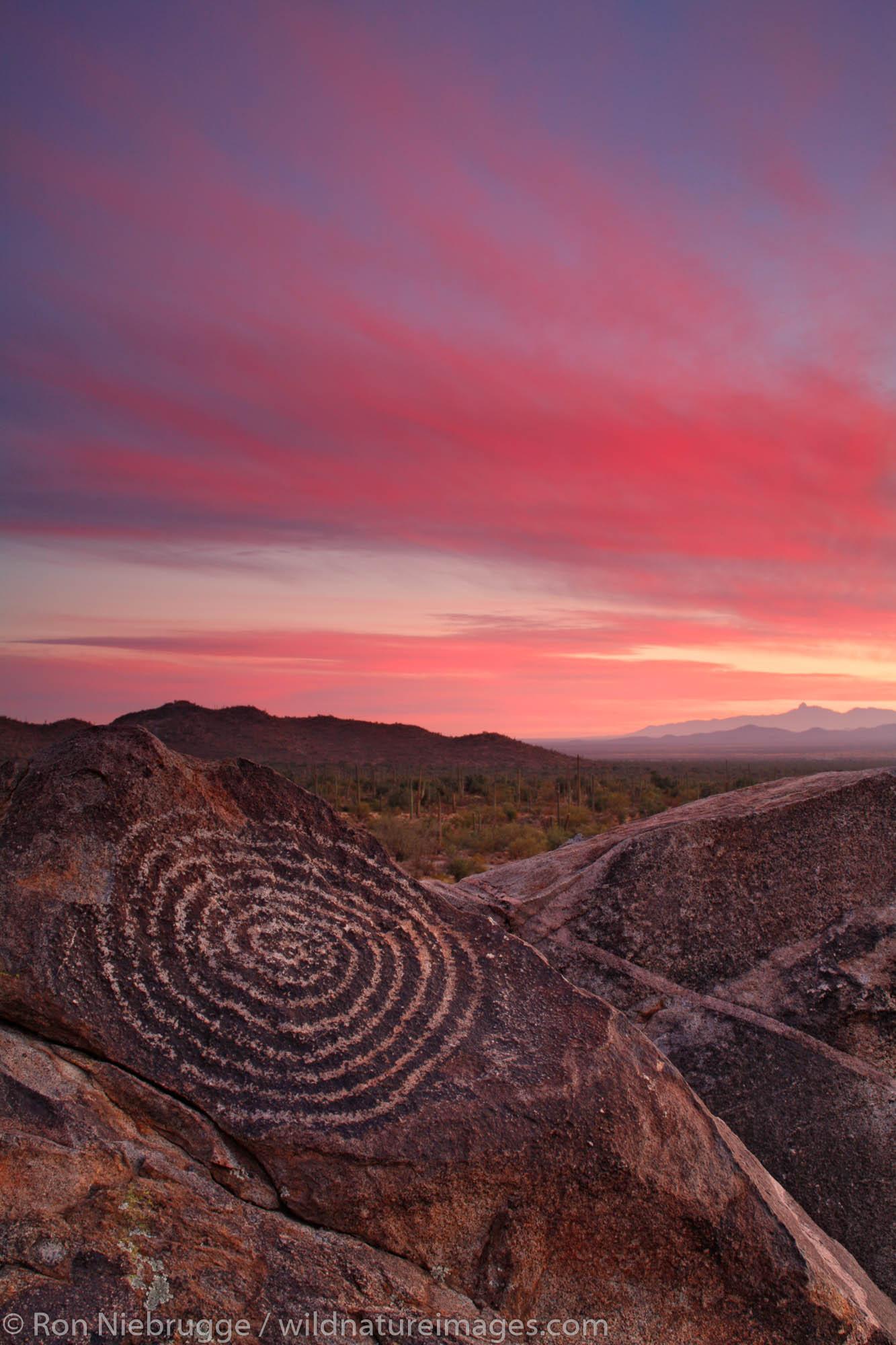 Saguaro National Park, Tucson, Arizona, photo