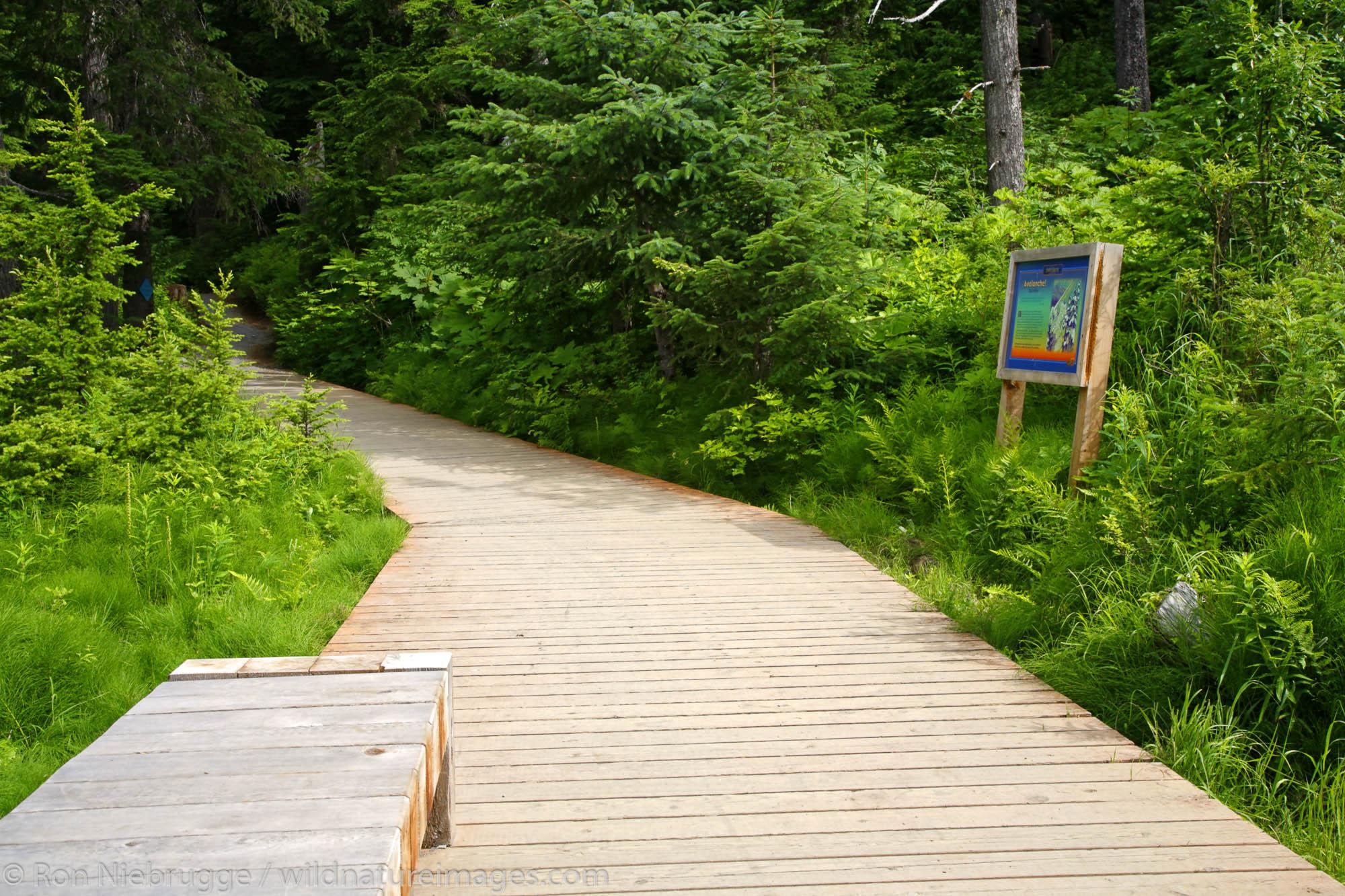Winner Creek Gorge Trail, Girdwood, Chugach National Forest, Alaska.