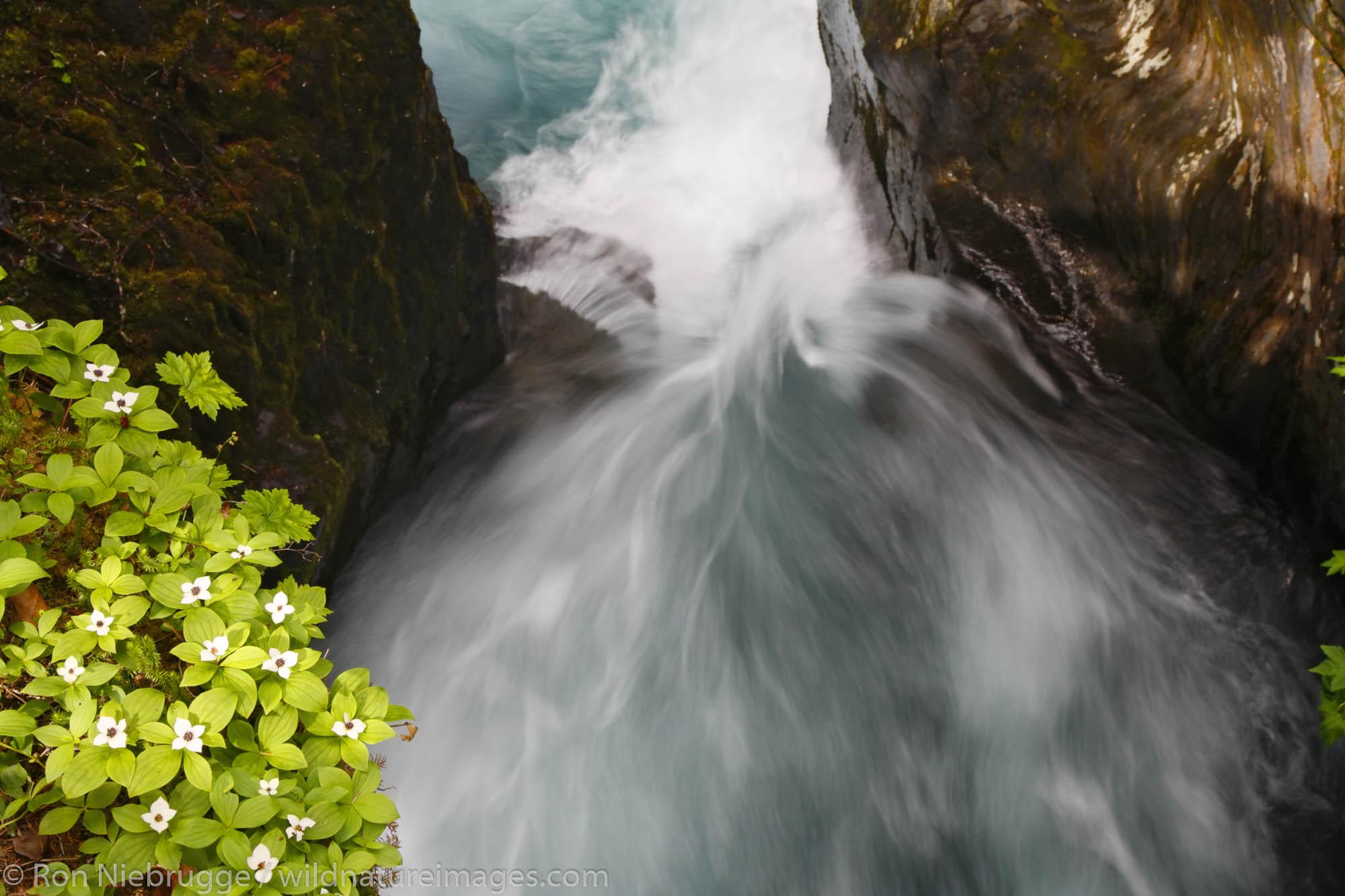 Winner Creek Gorge, from the Winner Creek Gorge Trail, Girdwood, Chugach National Forest, Alaska.