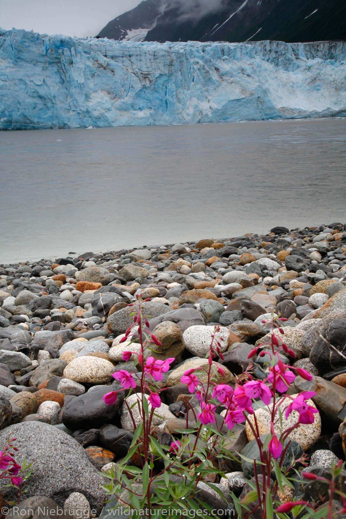 Childs Glacier and the Copper River, Cordova, Chugach National Forest, Alaska.