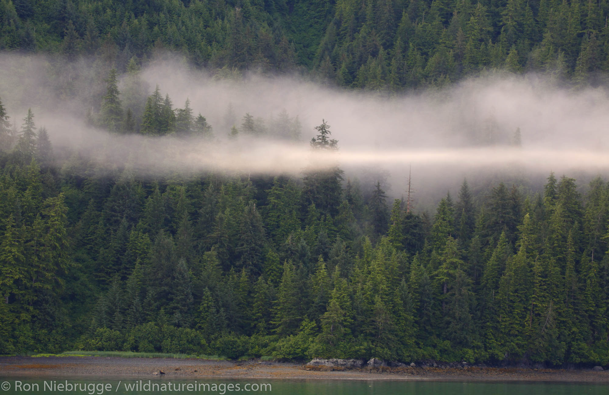 Low clouds over the temperate rainforest, Prince William Sound, Chugach National Forest, Alaska.