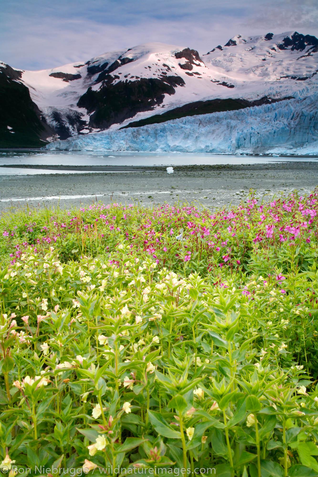 Chugach National Forest, Alaska Chugach, Harriman Glacier, photo