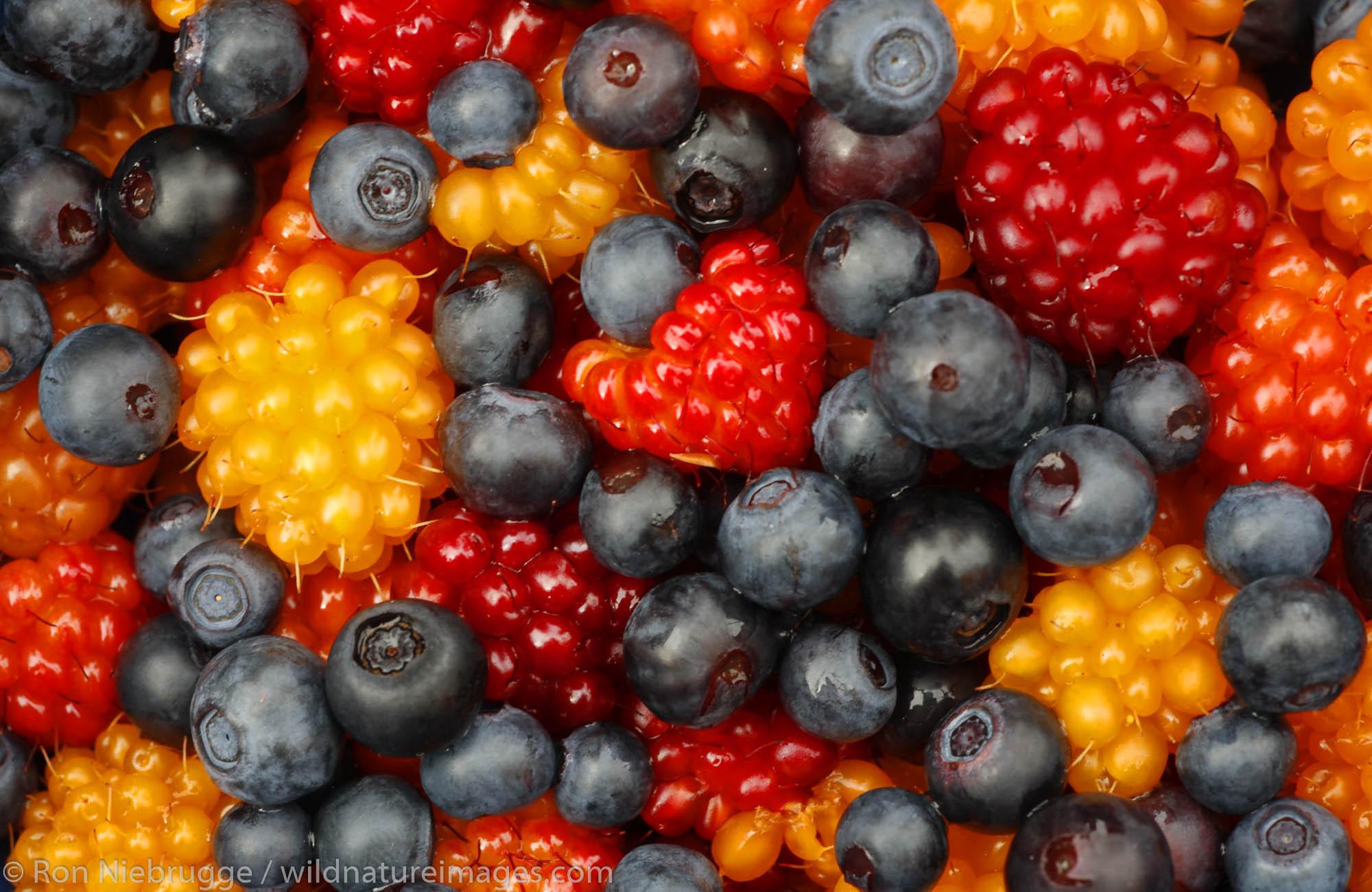 Colorful Berries, Prince William Sound, Chugach National Forest, Alaska.