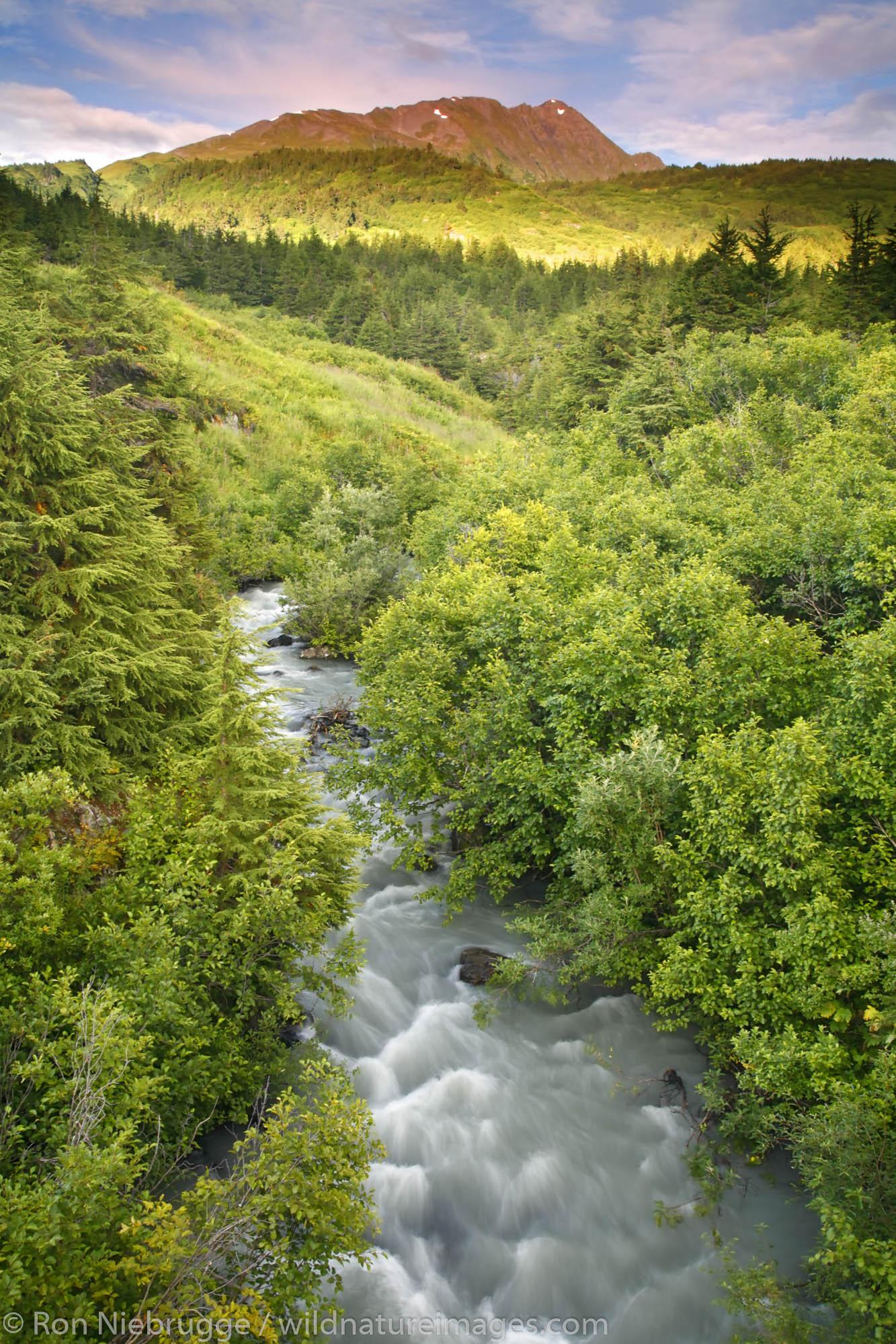 A stream in Turnagain Pass, Chugach National Forest, Alaska.