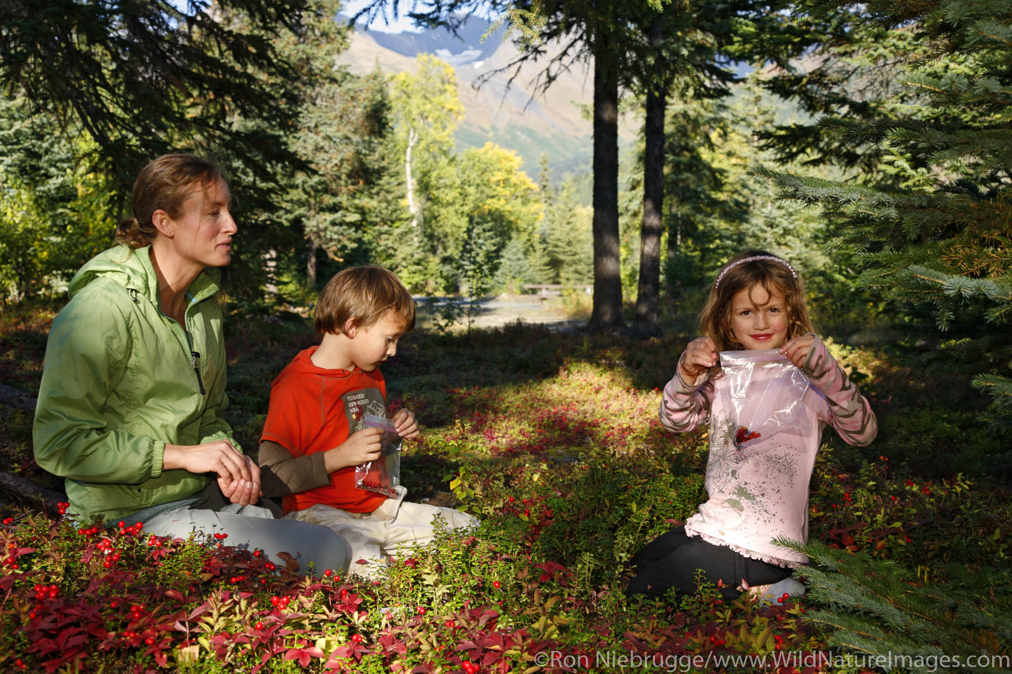 Berry Picking at Trail Lake Campground, Kenai Peninsula, Chugach National Forest, Alaska.  (MR)