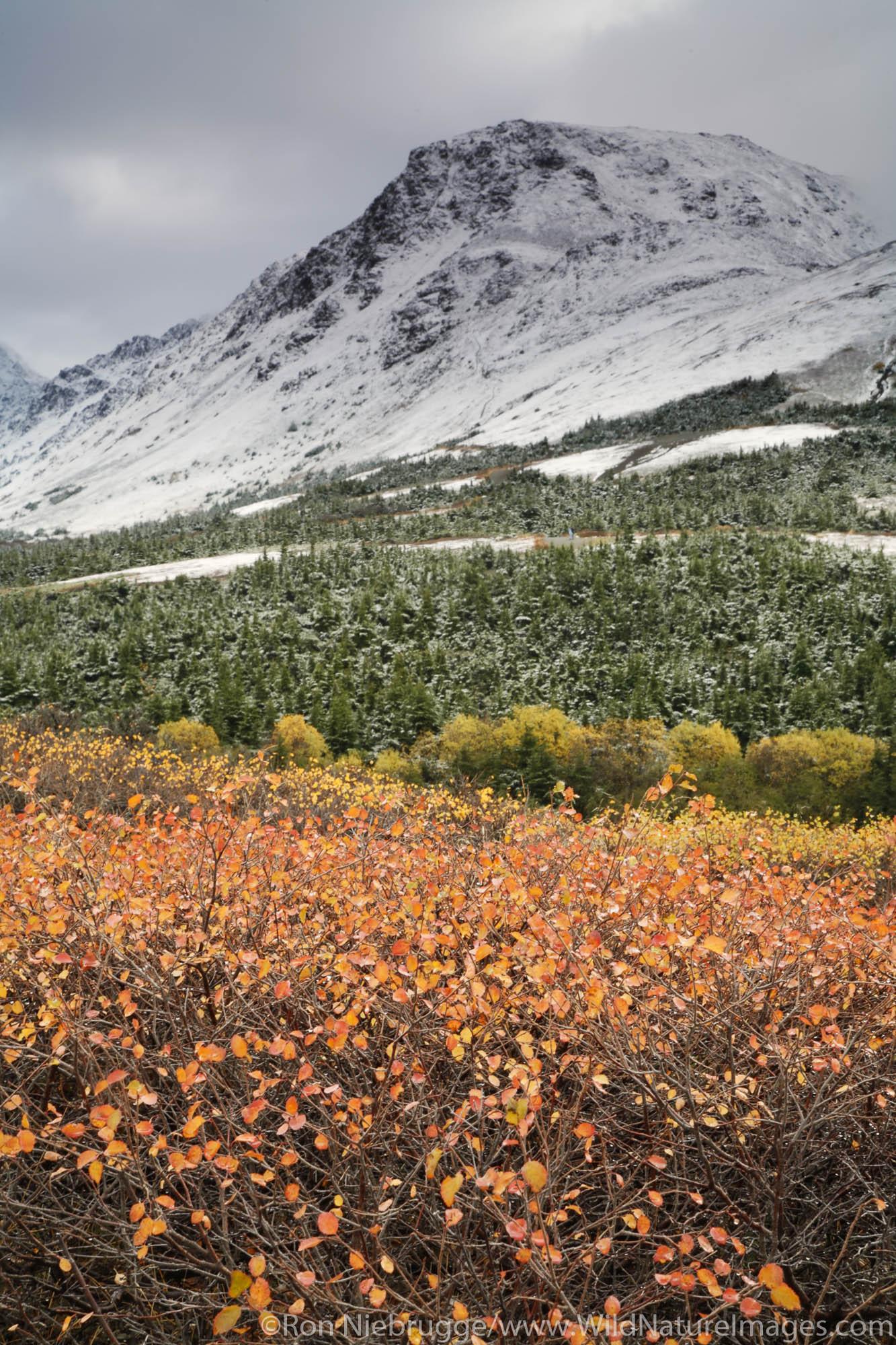 Autumn in Chugach State Park Chugach Mountains Anchorage Alaska.