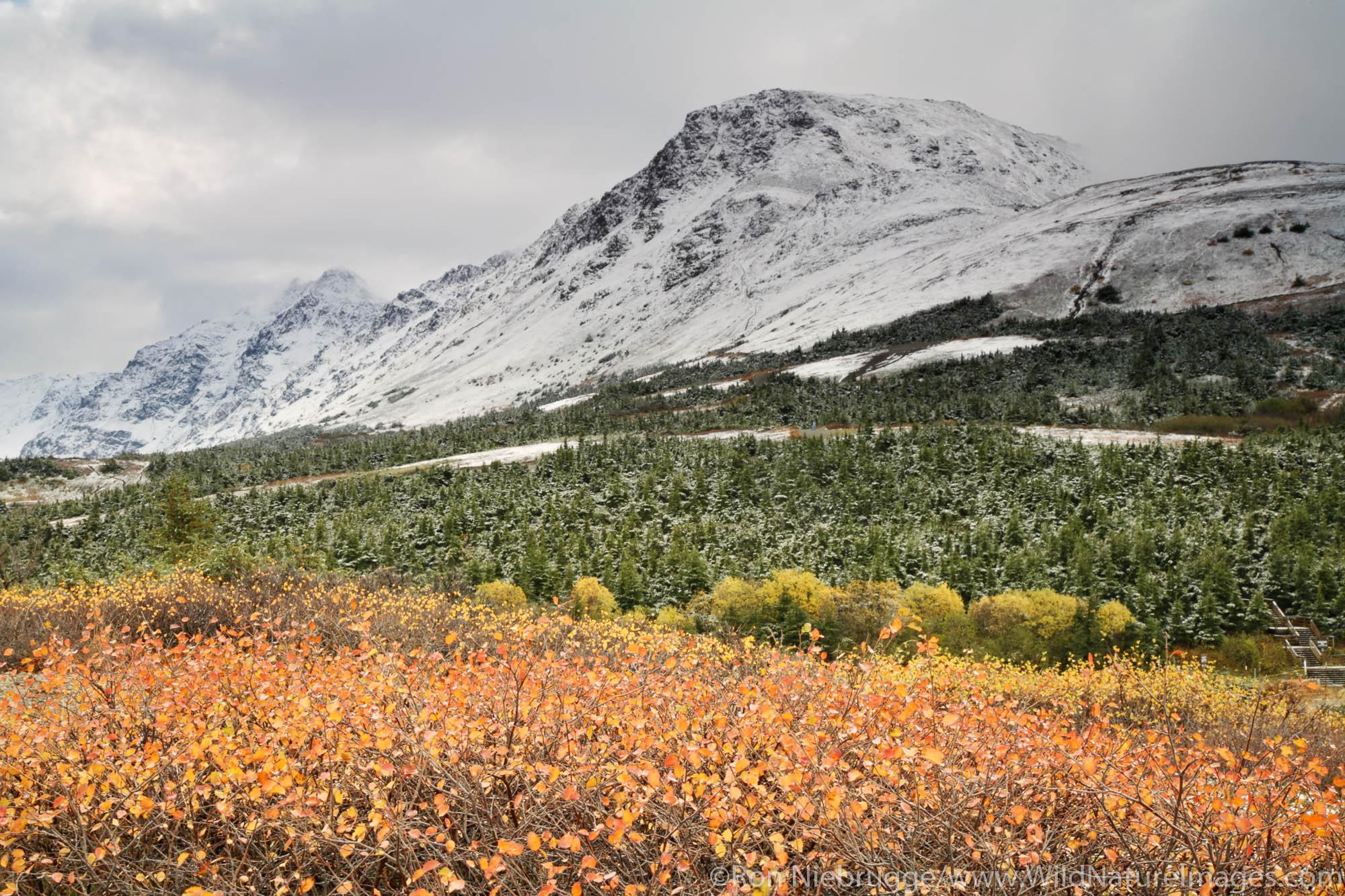Autumn in Chugach State Park, Chugach Mountains, Anchorage, Alaska.