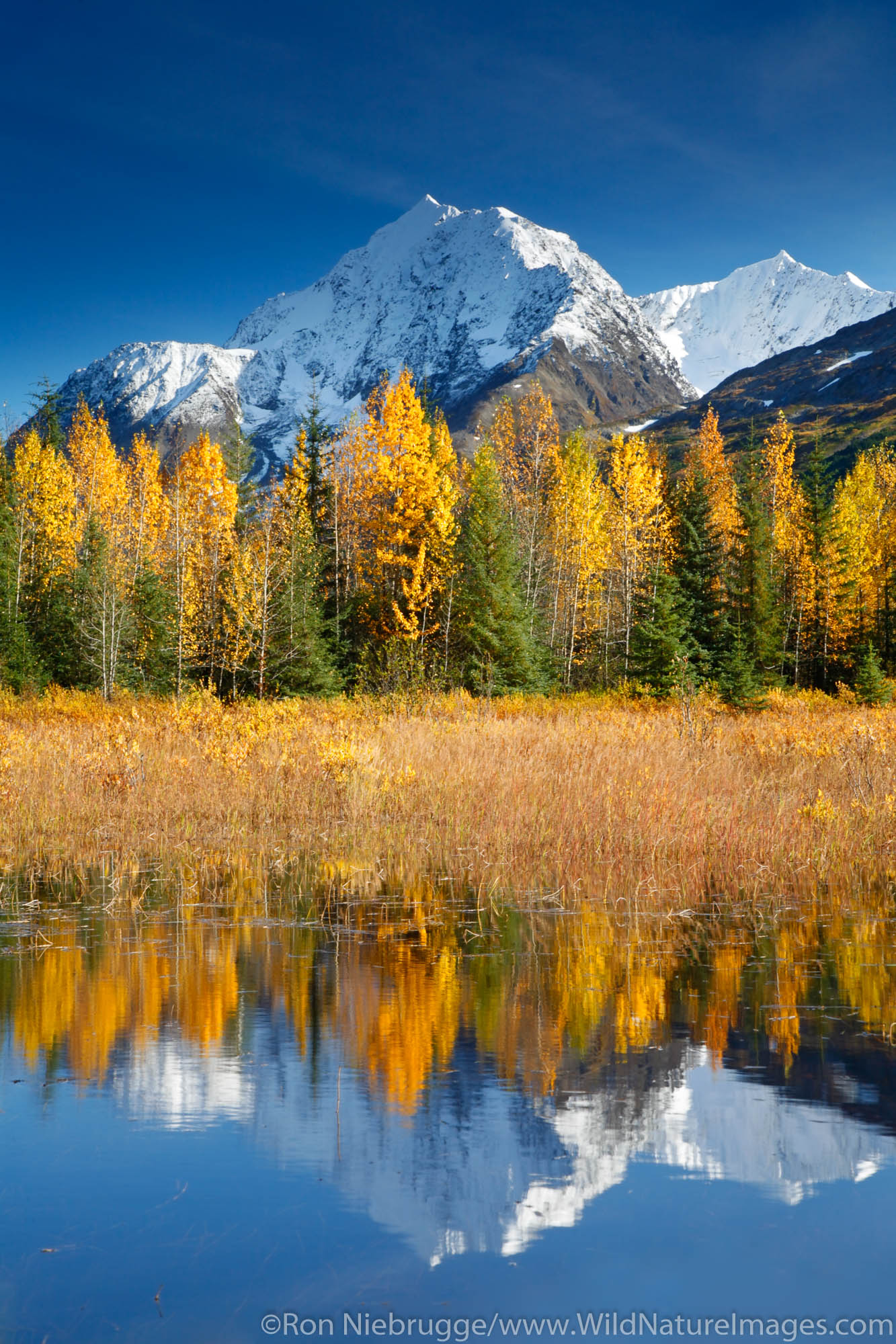 Autumn in Alaska. Kenai Peninsula Chugach National Forest.