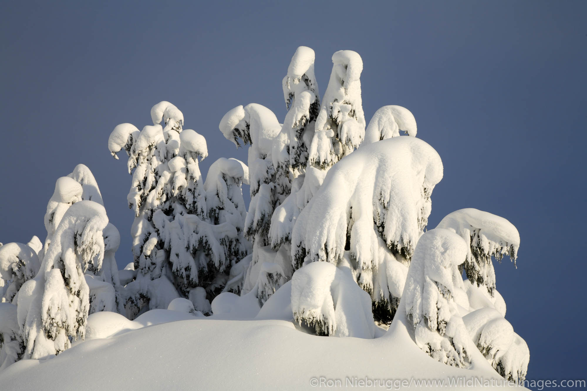 Winter in Turnagain Pass, Chugach National Forest, Alaska.