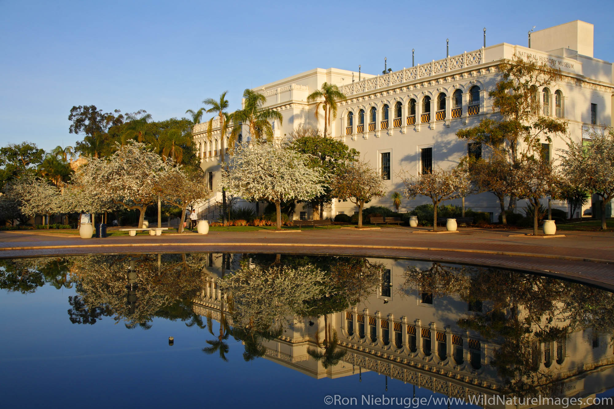The San Diego Natural History Museum reflects in the Bea Evenson Fountain, Balboa Park, San Diego, California.