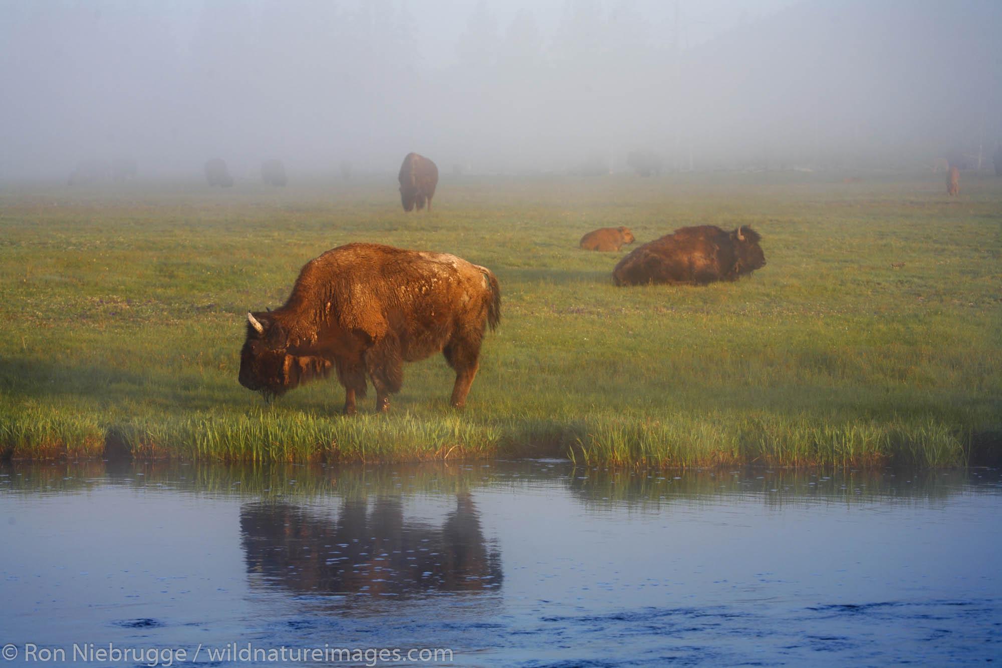 Yellowstone National Park, Wyoming, photo