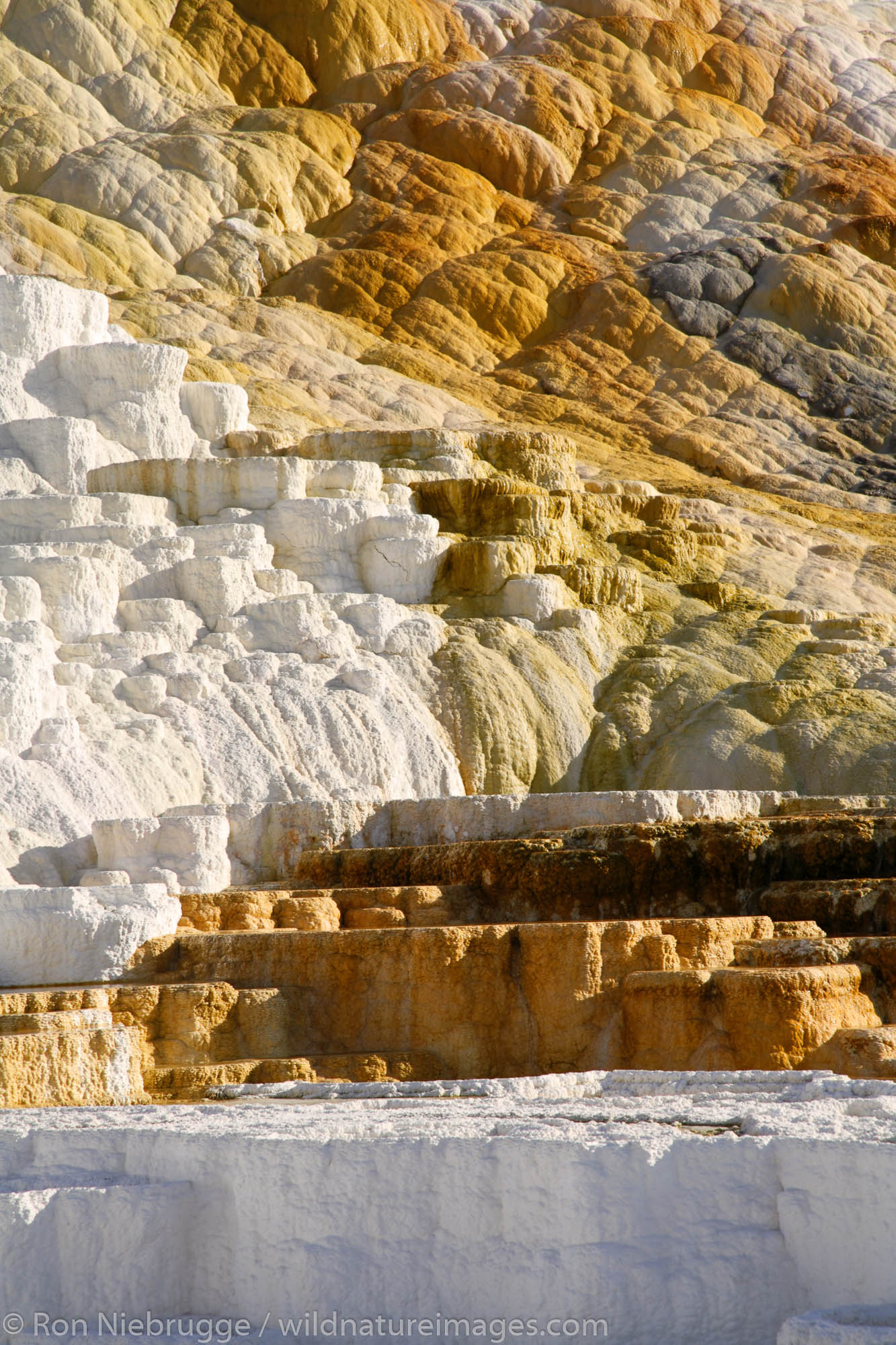 The Lower Terrace Area of Mammoth Hot Springs, Yellowstone National Park, Wyoming.