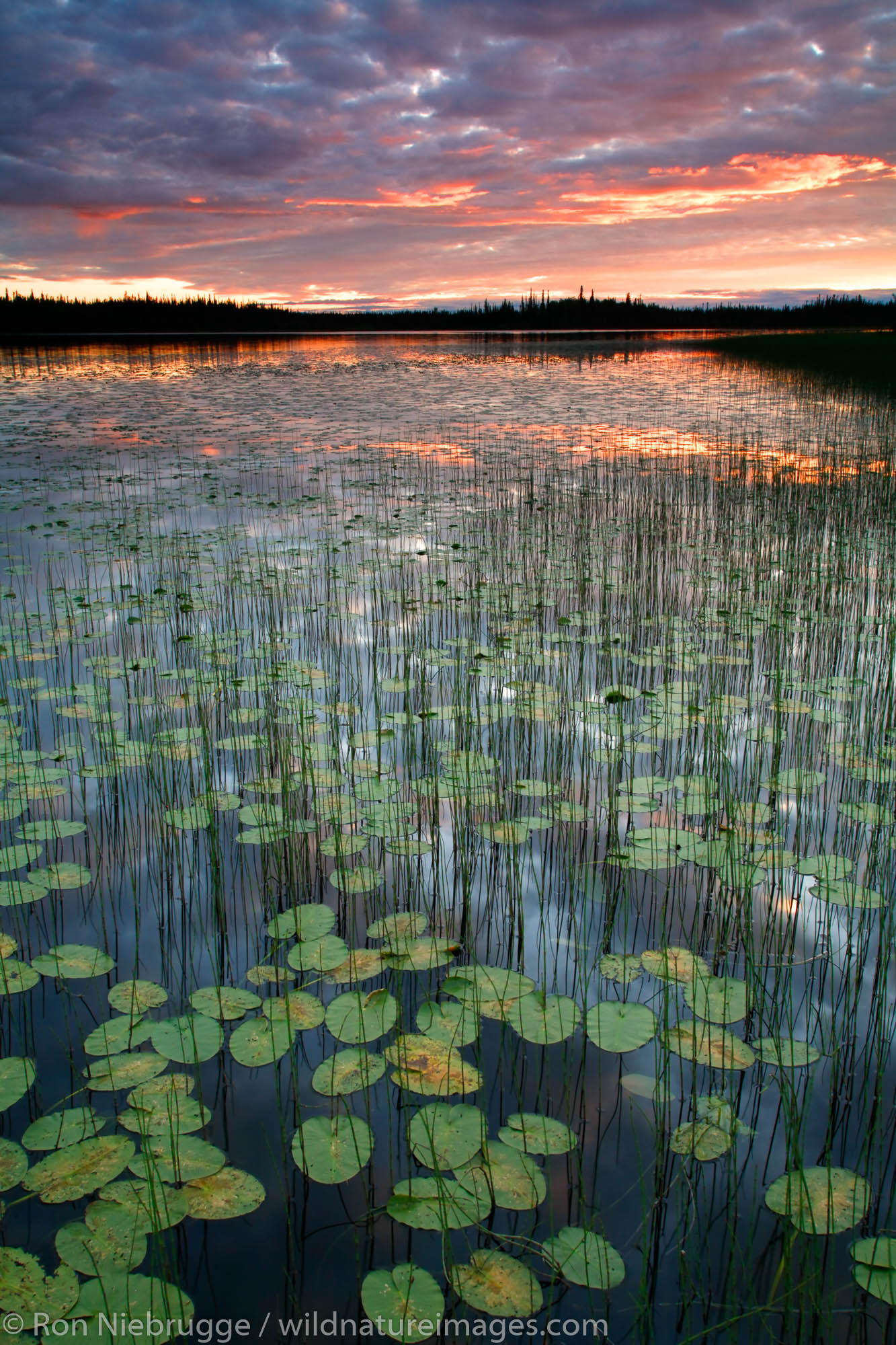Deadman Lake, Tetlin National Wildlife Refuge, Alaska.